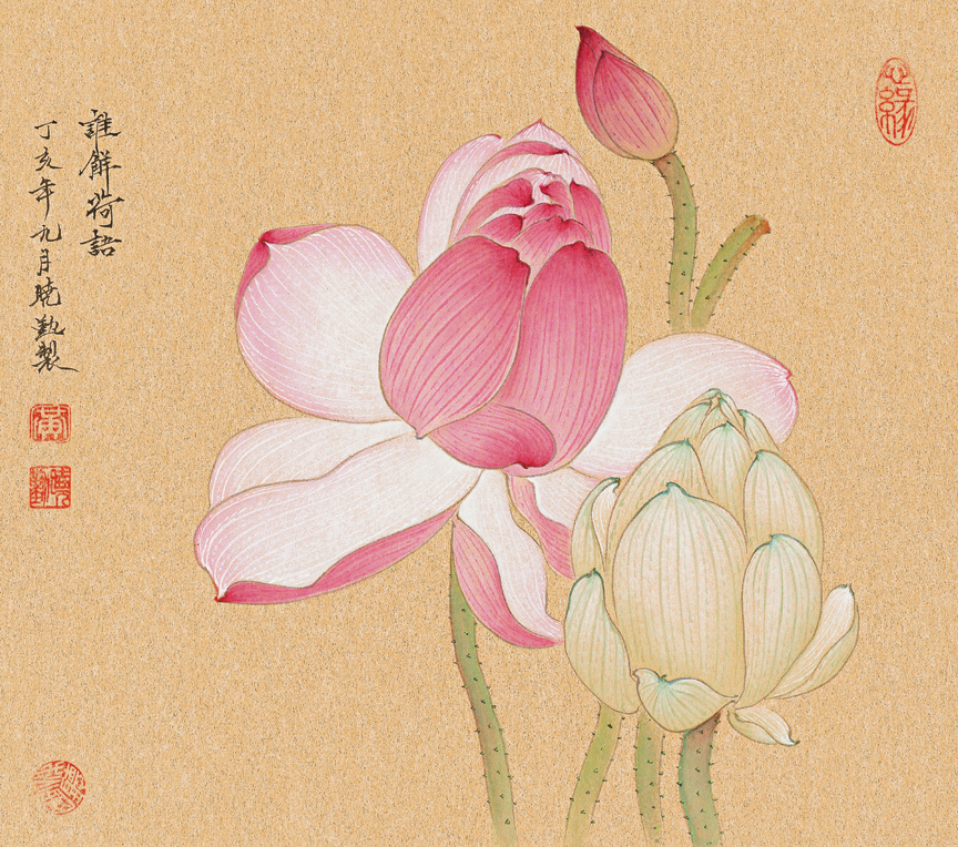Pink Lotus Bloom and Buds