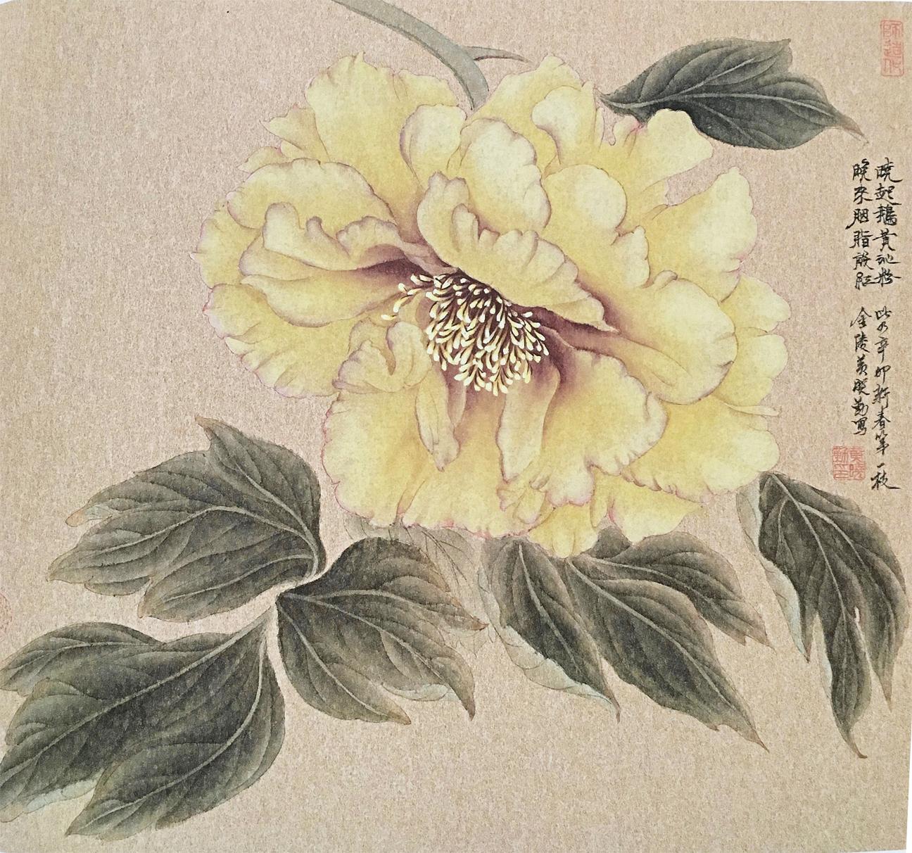Yellow Peony Blossom