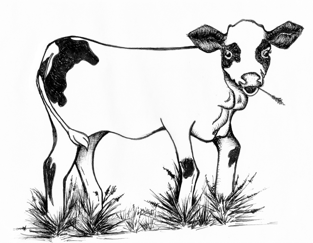 Brittany Cow.jpg