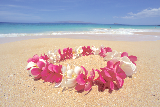 maui-flower-lei-1.png