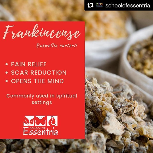 #Repost @schoolofessentria with @get_repost ・・・ FREEDOM for FRANKIE‼️ This oil right here can bring freedom to your pain, your mind, your scars, etc....pretty cool if you ask us 👌  Frankincense is a more expensive oil because the trees used for some species can't be cultivated and only grows in a mountain area in Somalia and a few other countries.  If you can't mail something to the country your oil is made in for that cost, I hope you weren't expecting to pay that much for a bottle of the essential oil 🧐  Frankincense is commonly diffused or burned as incense in churches.  It does help with spiritual connections, among other 😍 amazing things.  It also happens to be one of the top oils used in the perfumery 👃 industry.  What do you know about Frankincense⁉️ What's your favourite way to use❓ Or is it on your wish list❓  #aromatherapycertification #essentria #essentialoileducation  #certifiedaromatherapist  #expertknowledge  #EssentialOilSafety #EssentialOils #schoolofessentria #frankincenseoil