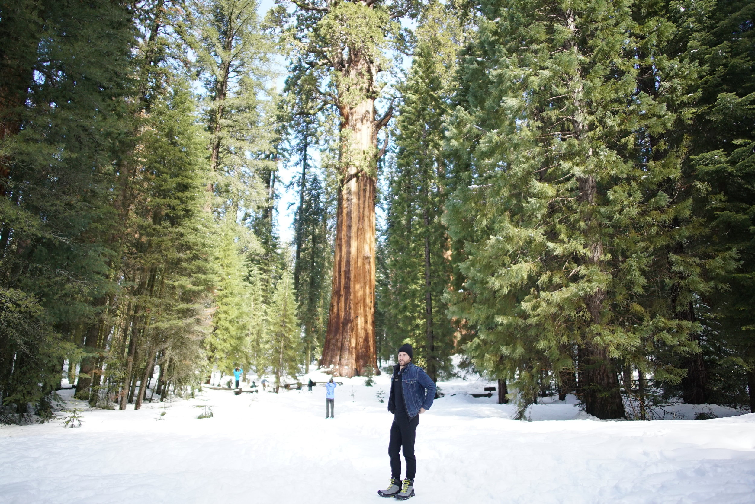 Revisiting Sequoia in early 2017.