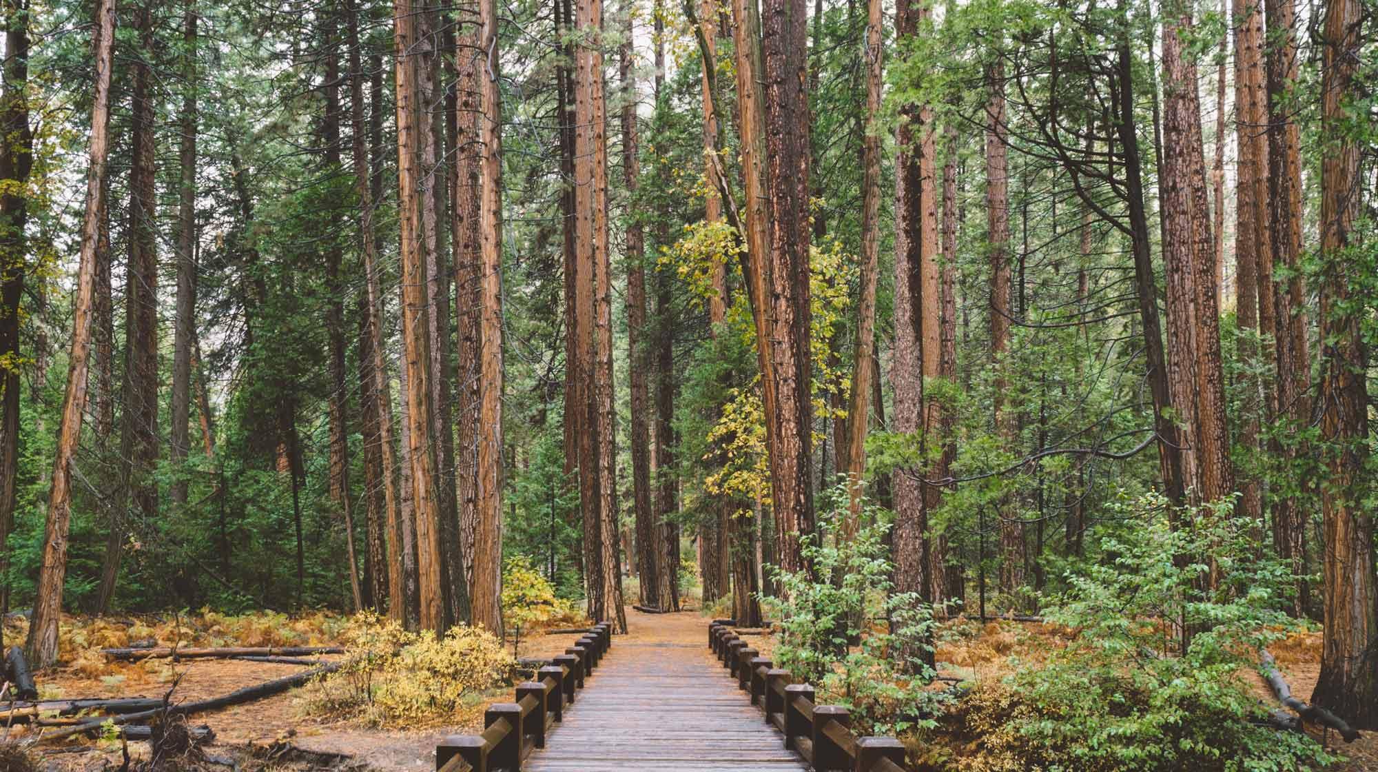 forrest-path-wood2000x1120web.jpg