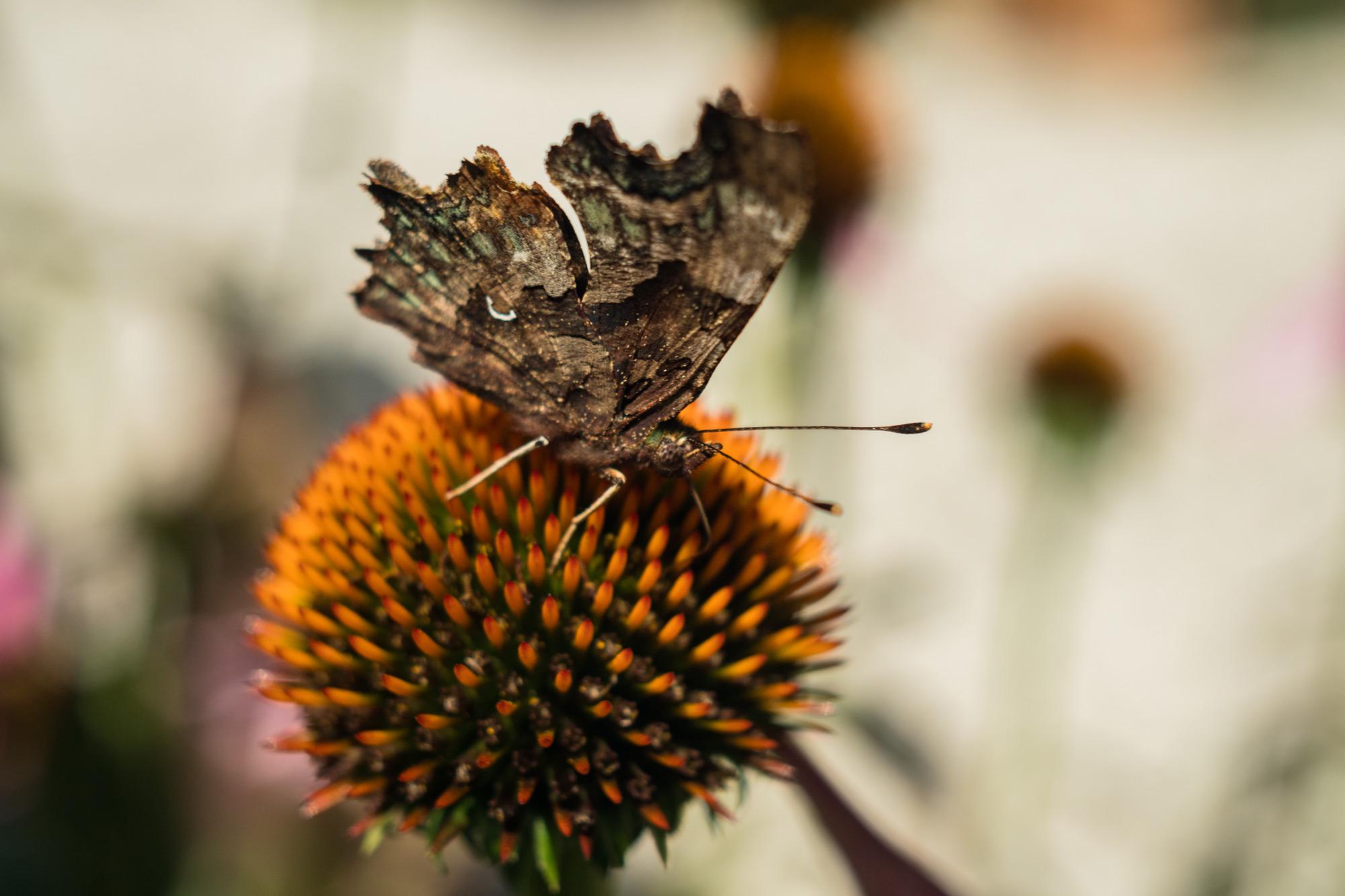 Nature-32.jpg