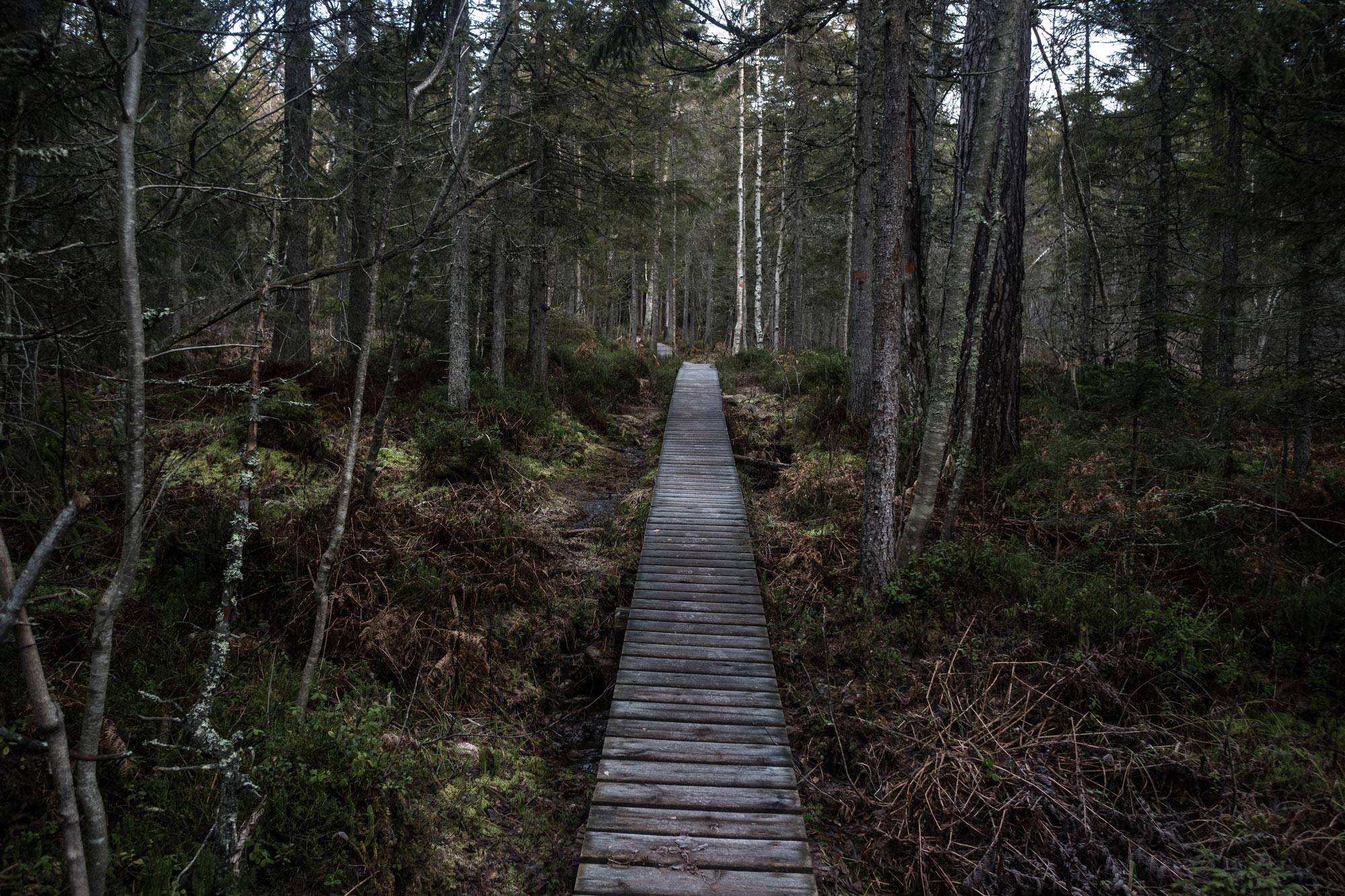 skuleskogen-8.jpg
