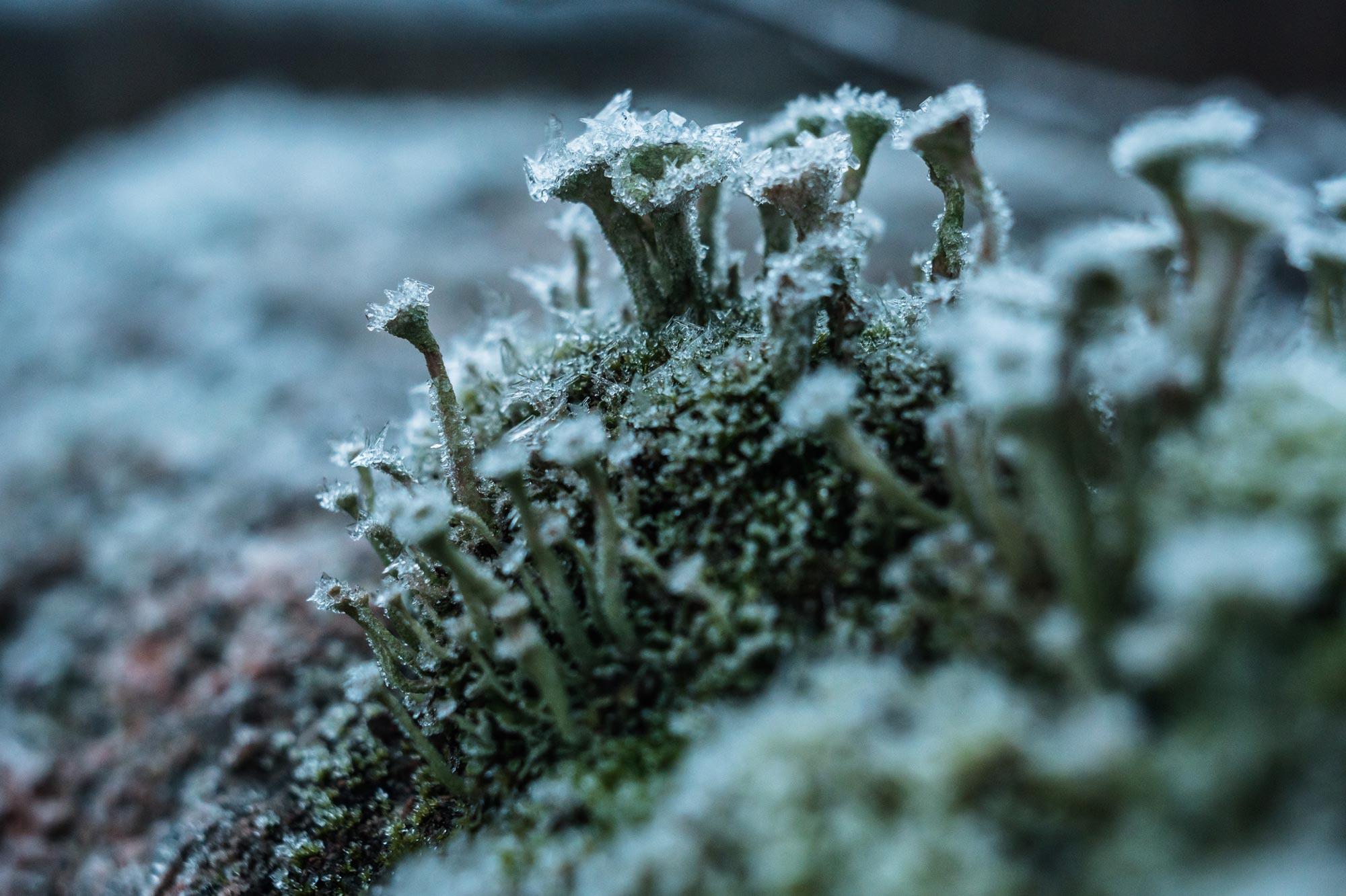 skuleskogen-66.jpg