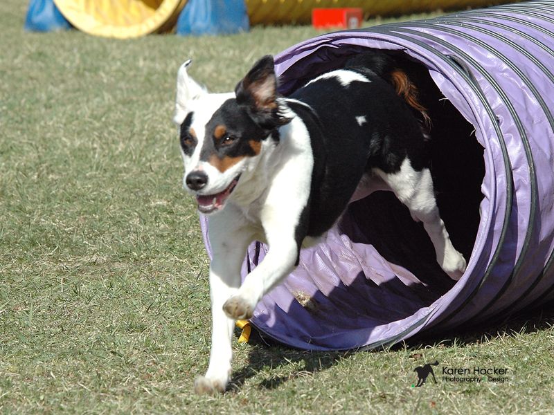 Clementine Border collie mix and Kate Bigger- stranger fear dog training.