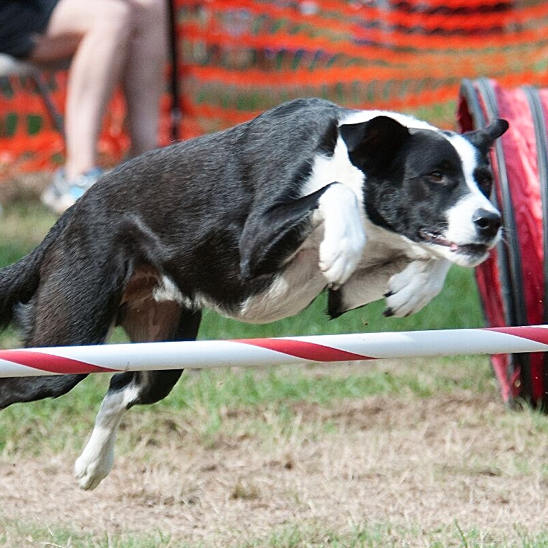 Agility classes for your dog in Boston Massachusetts with Kate Bigger.