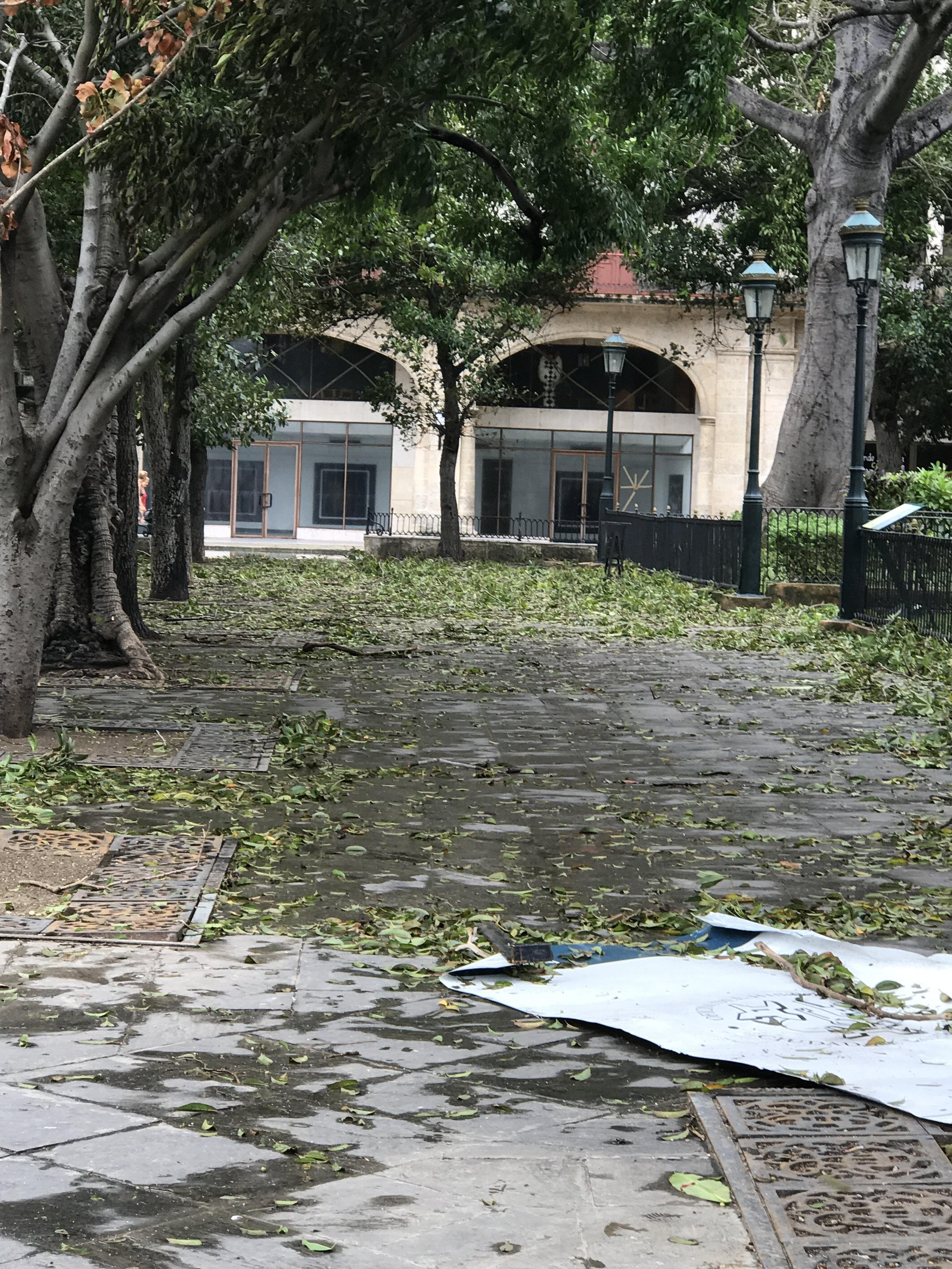 Some small portion of the tree and leaf debris on the ground the morning after.