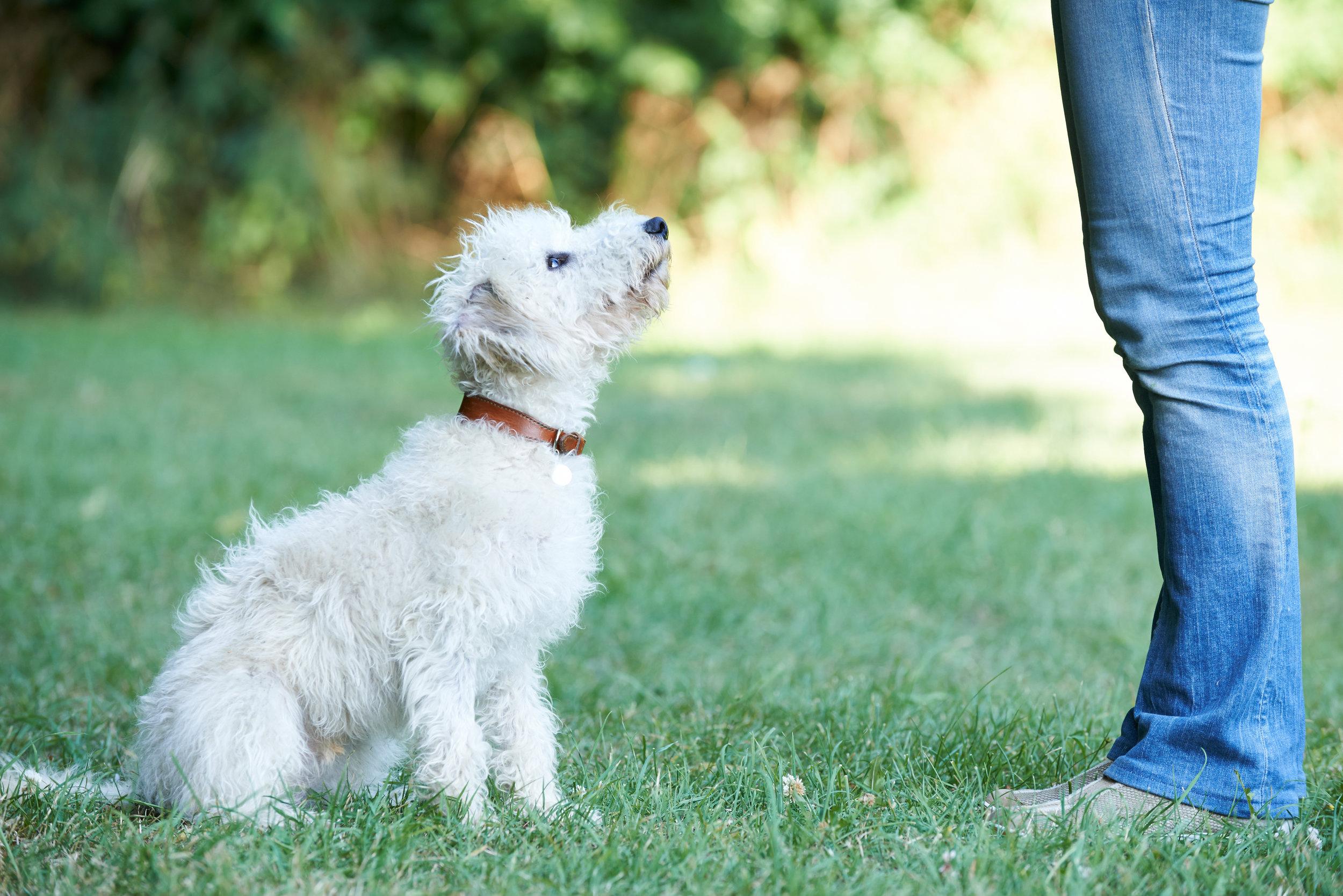Best dog trainer in Woodland Hills