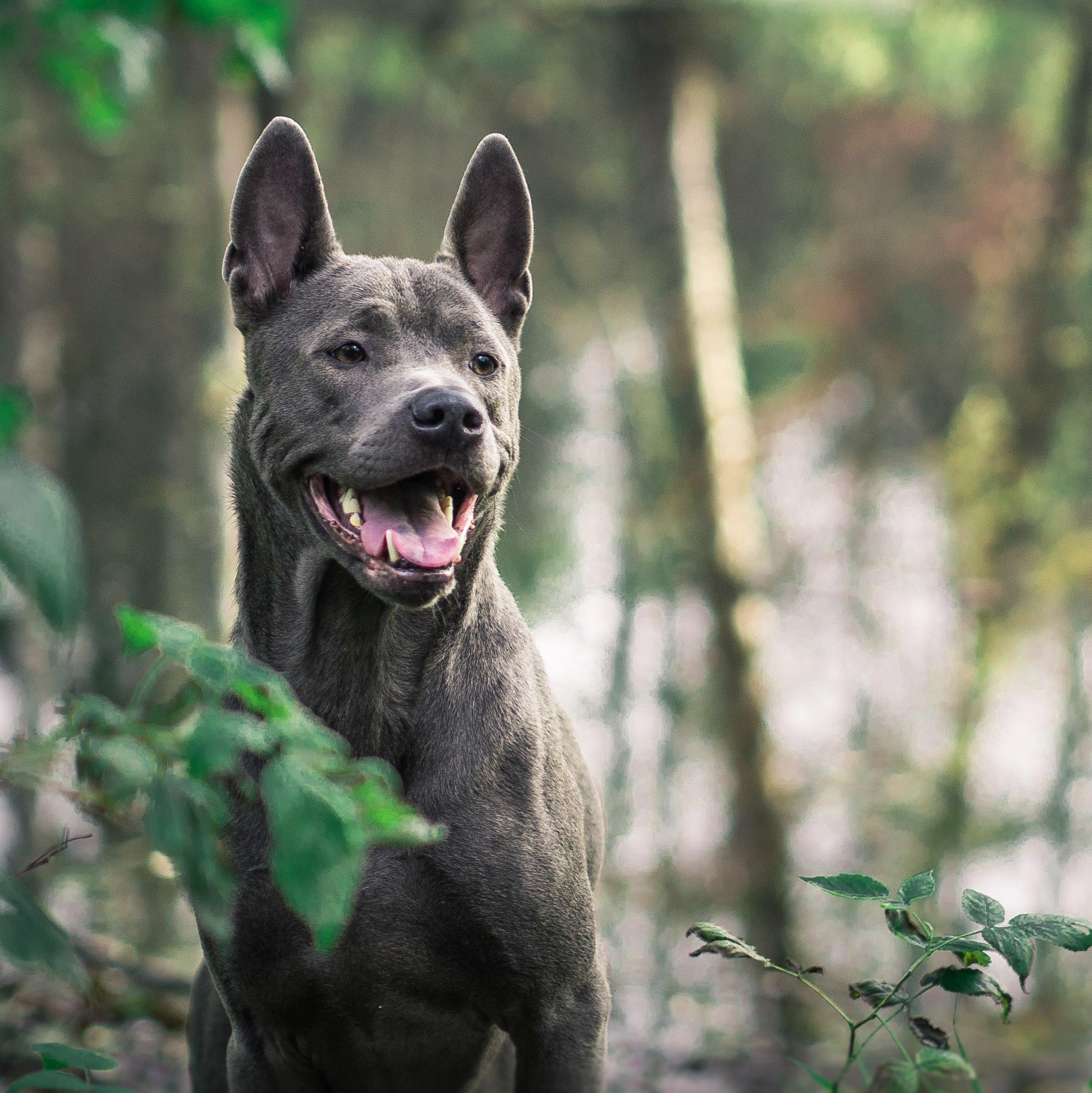 Best dog trainer in Westlake Village
