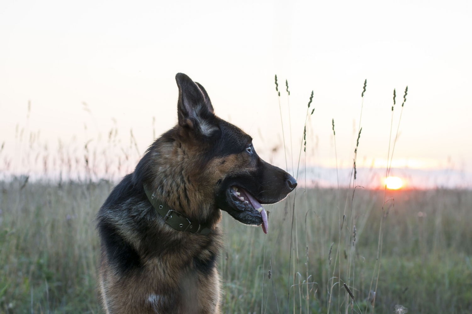 Best San Fernando Valley dog training for biting, jumping, chewing, obedience, leash walking, recall, house training, reactivity, guarding, or aggression.
