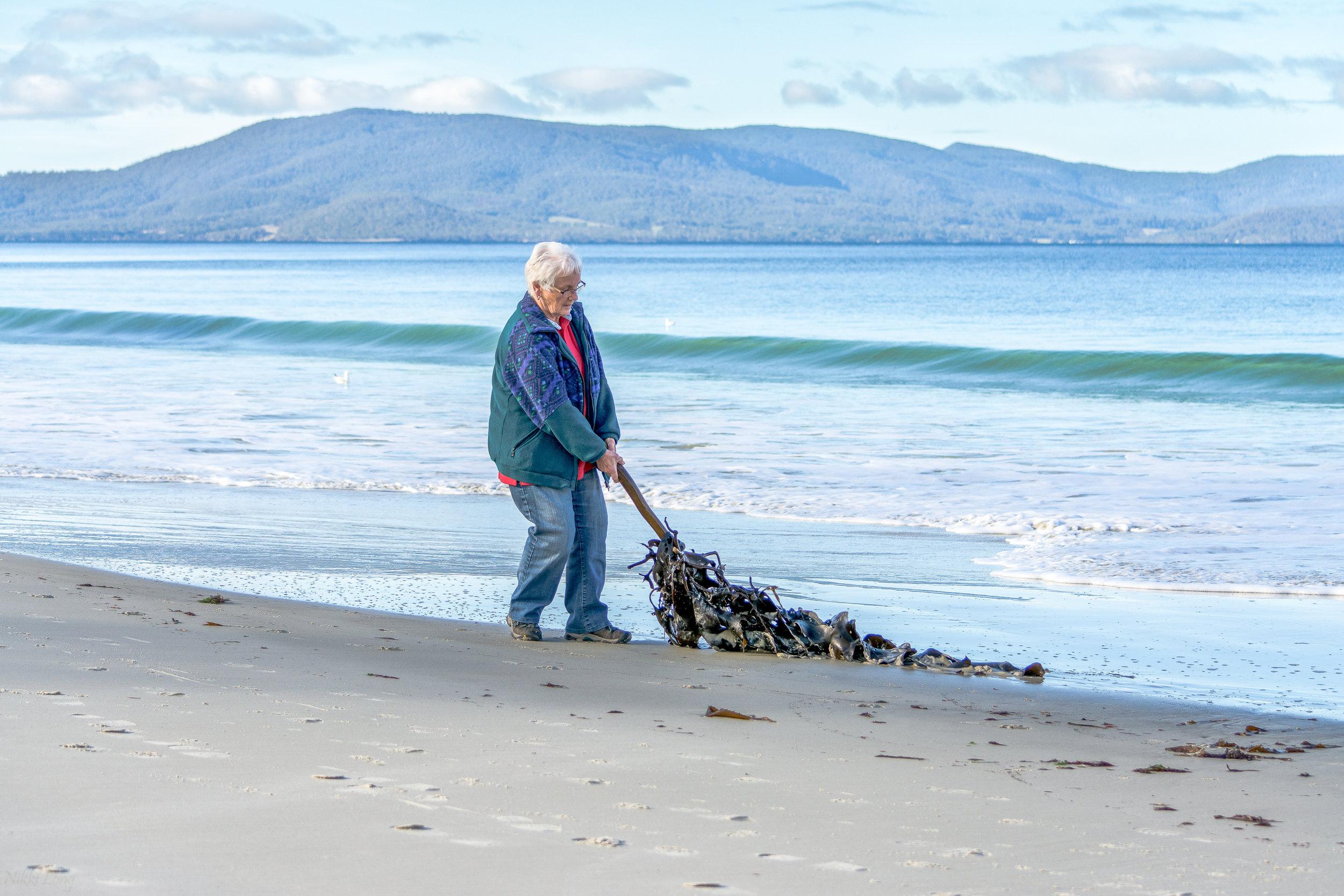 Helen Edwards collecting kelp - photo by Nikki Long 1.jpg