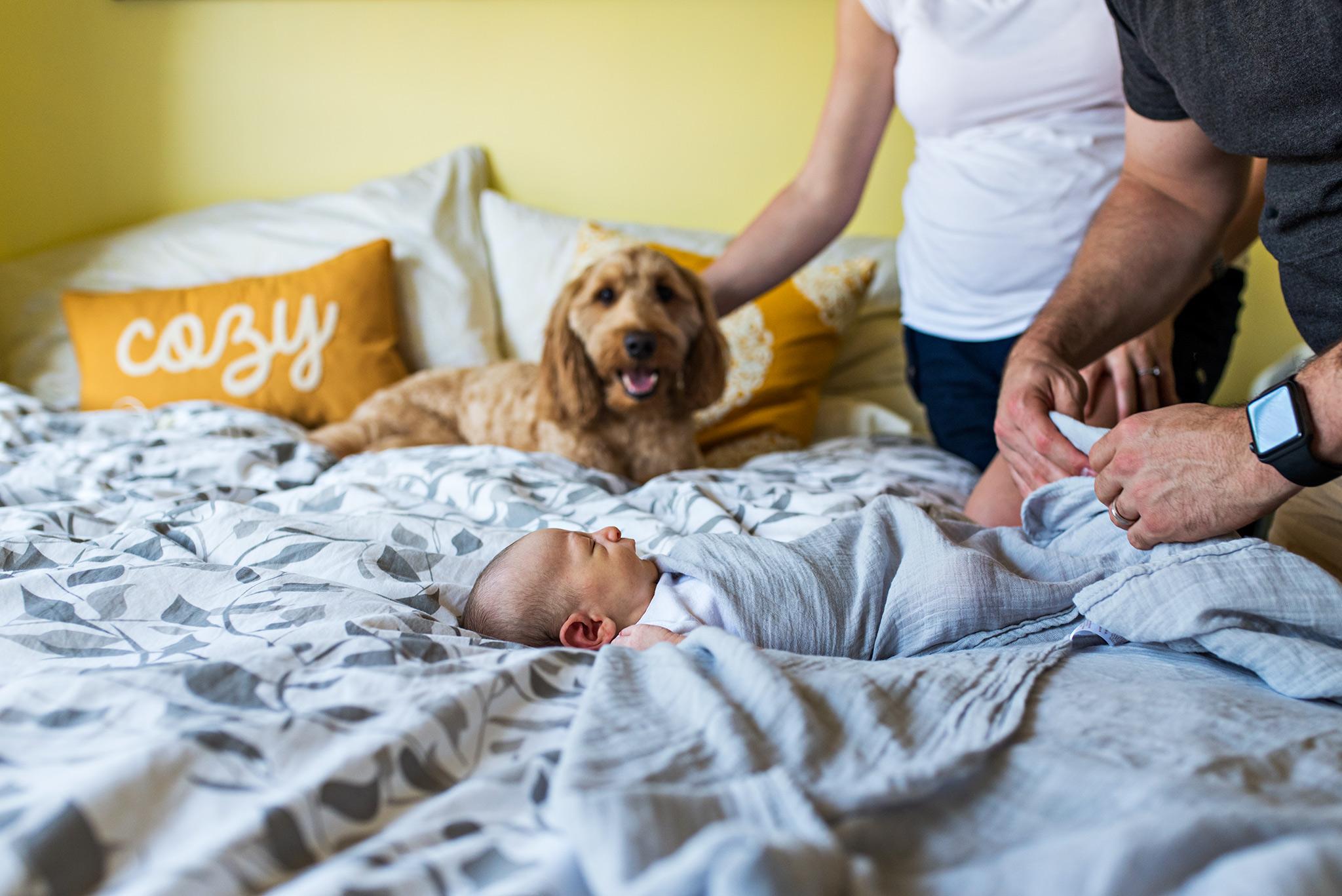 dad swaddling newborn. manchester, ct newborn photography