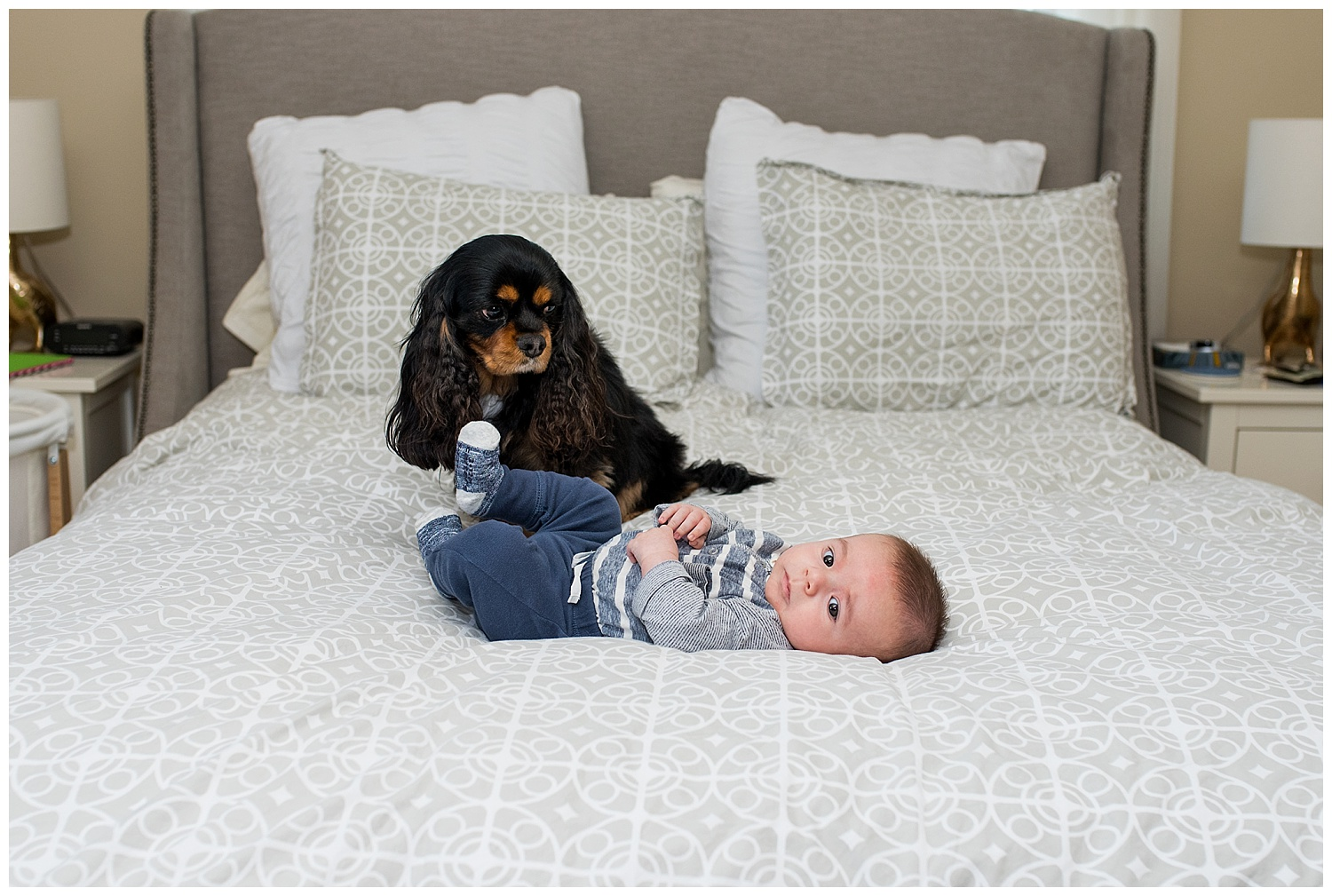 baby with dog photography in hartford, county, ct