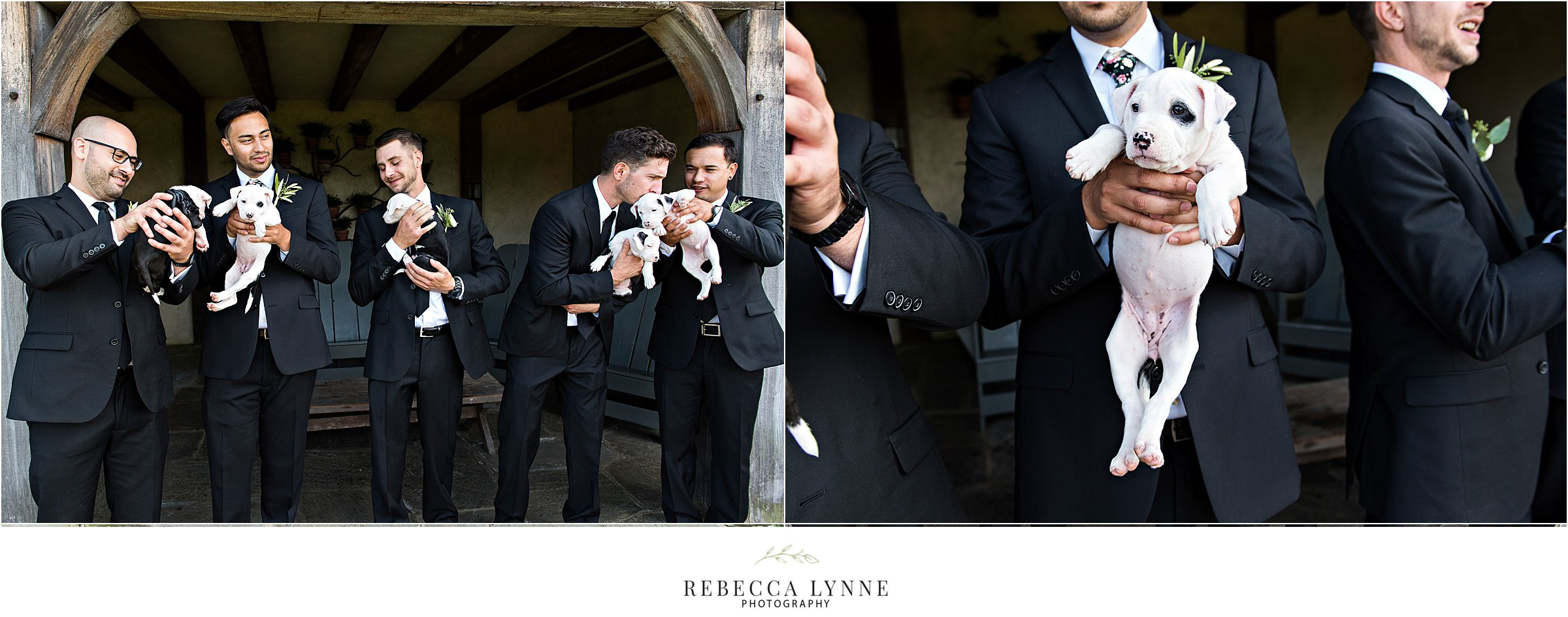 groom and groomsmen wedding photography with puppies