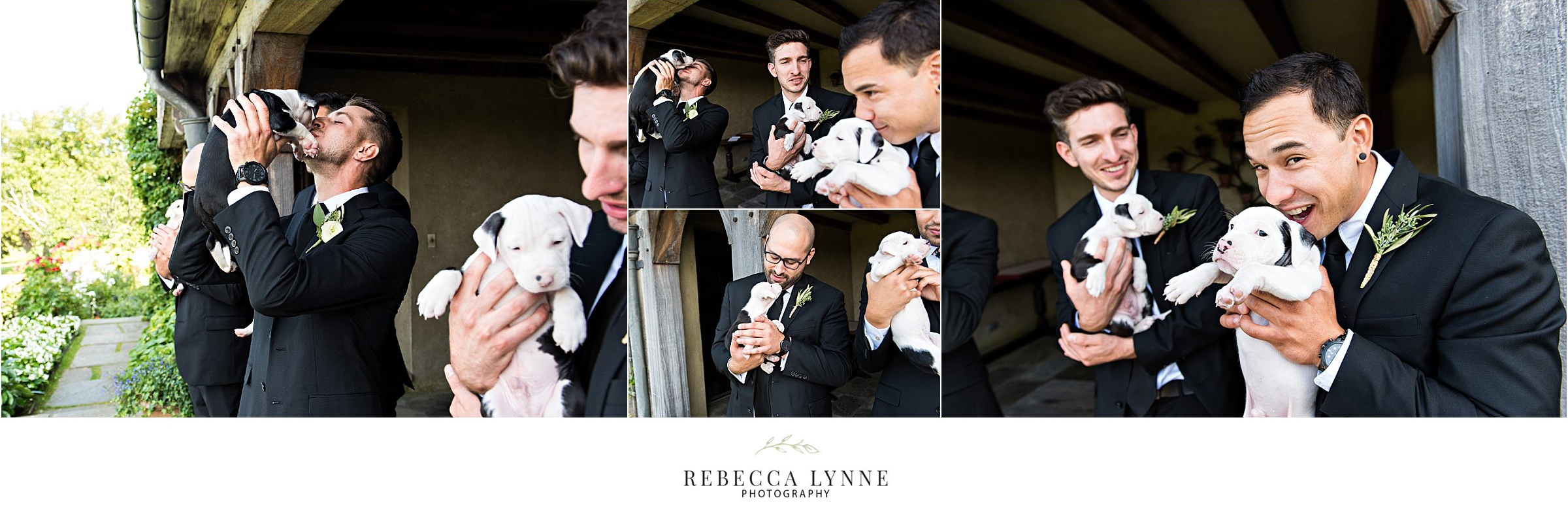 crazy adorable groom and groomsmen with puppies during wedding photography