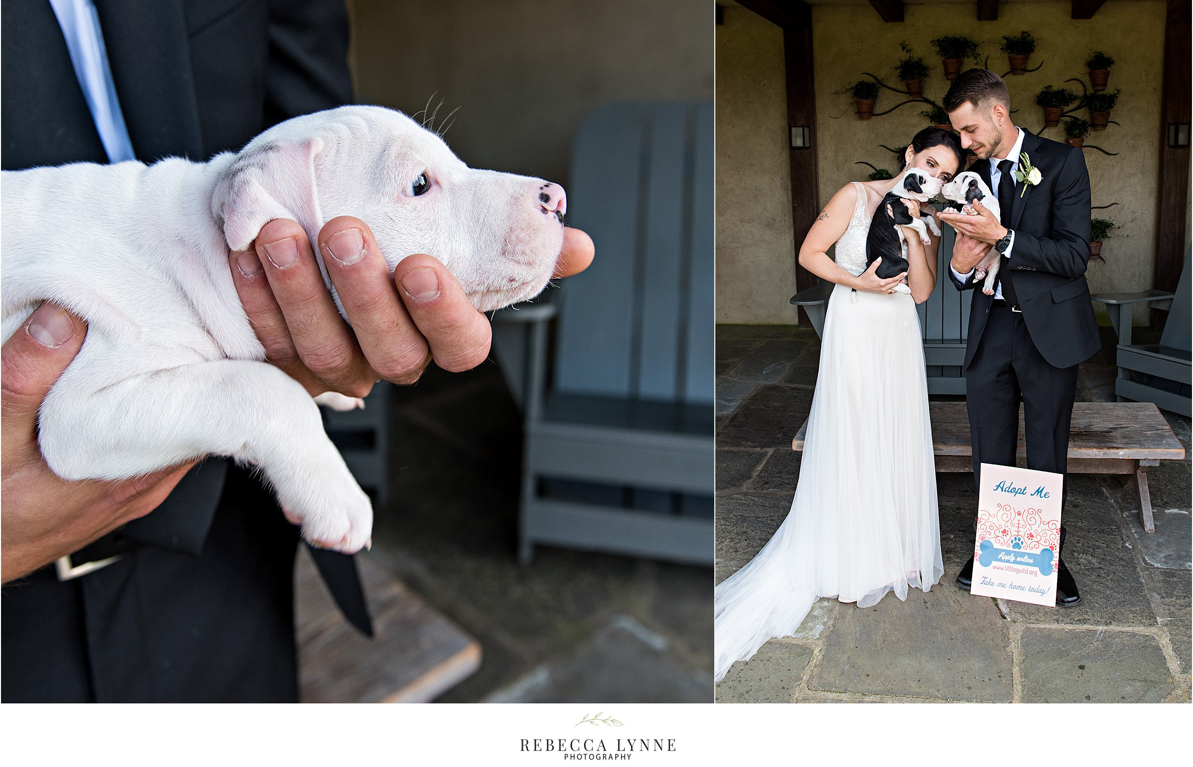 adopt a puppy awareness with wedding photography