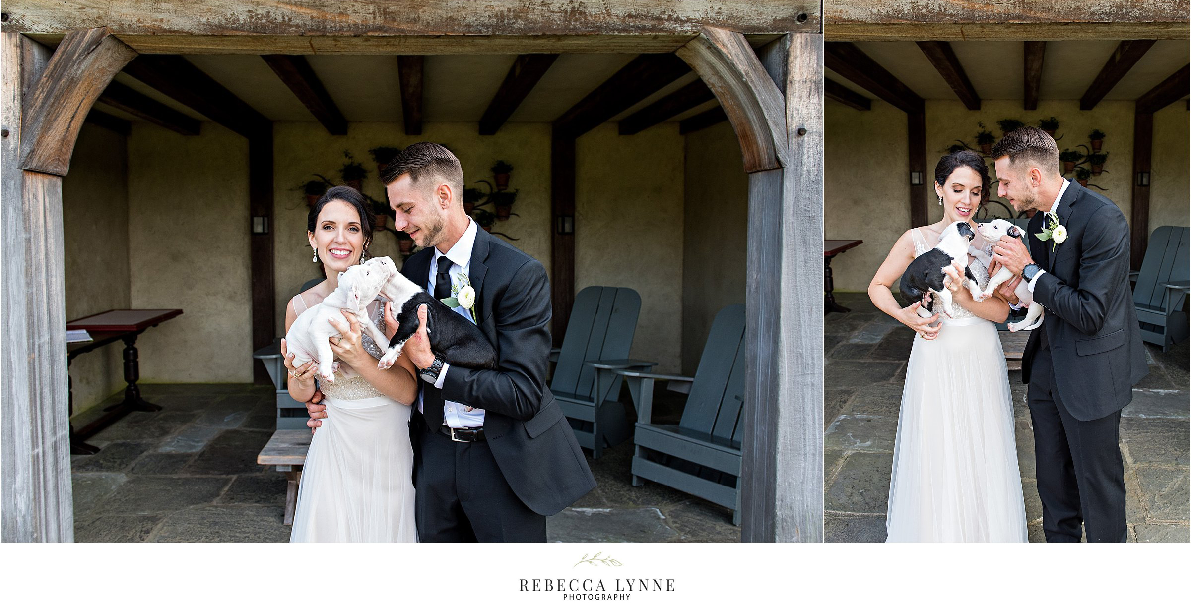 bride and groom wedding photography with rescue puppies to adopt