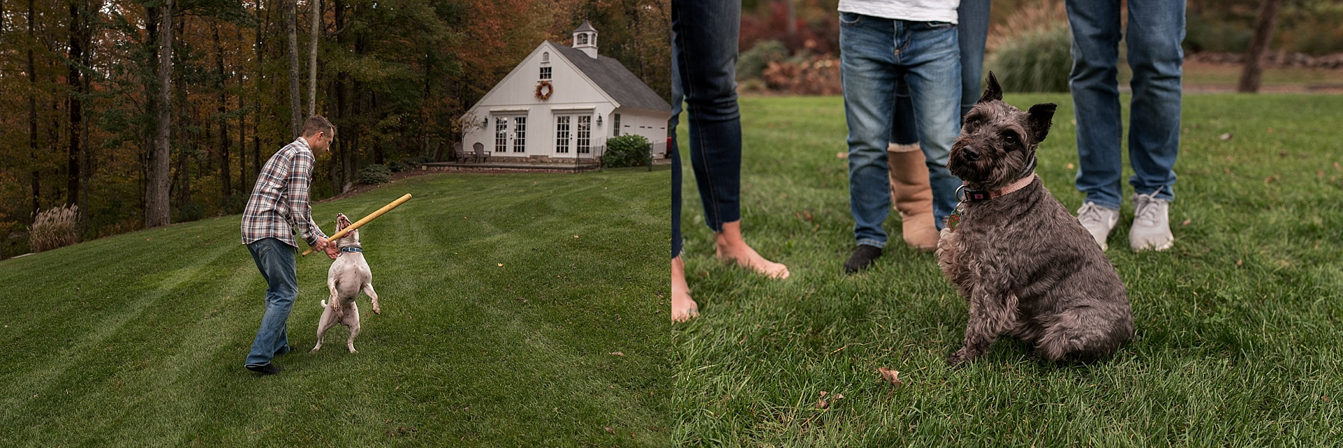 family dogs playing in yard during litchfield county photography session