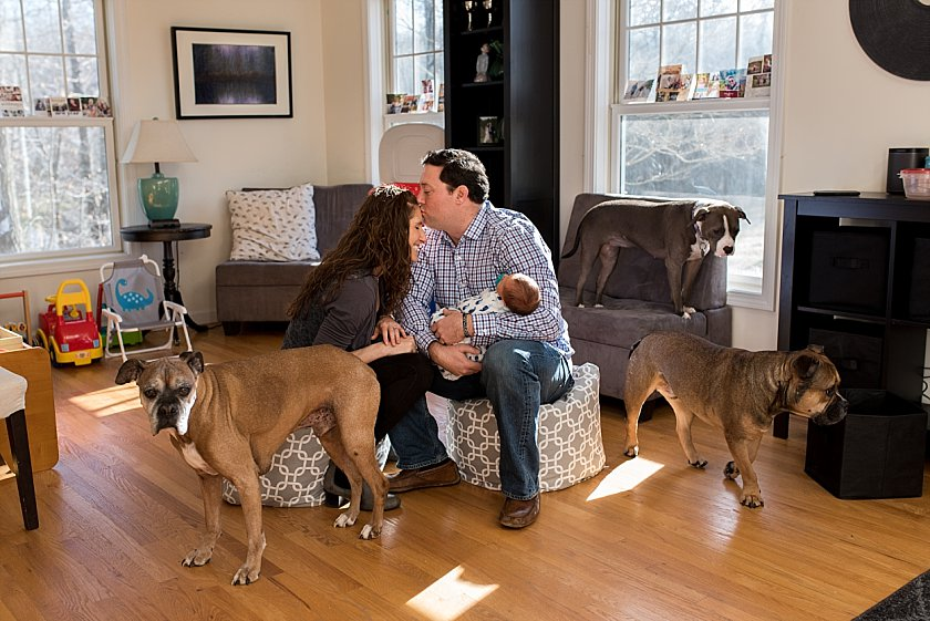 newborn photography with dogs. CT newborn photography.