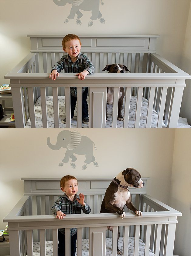 Toddler in his crib with his dog having fun during at home photography session in Connecticut.