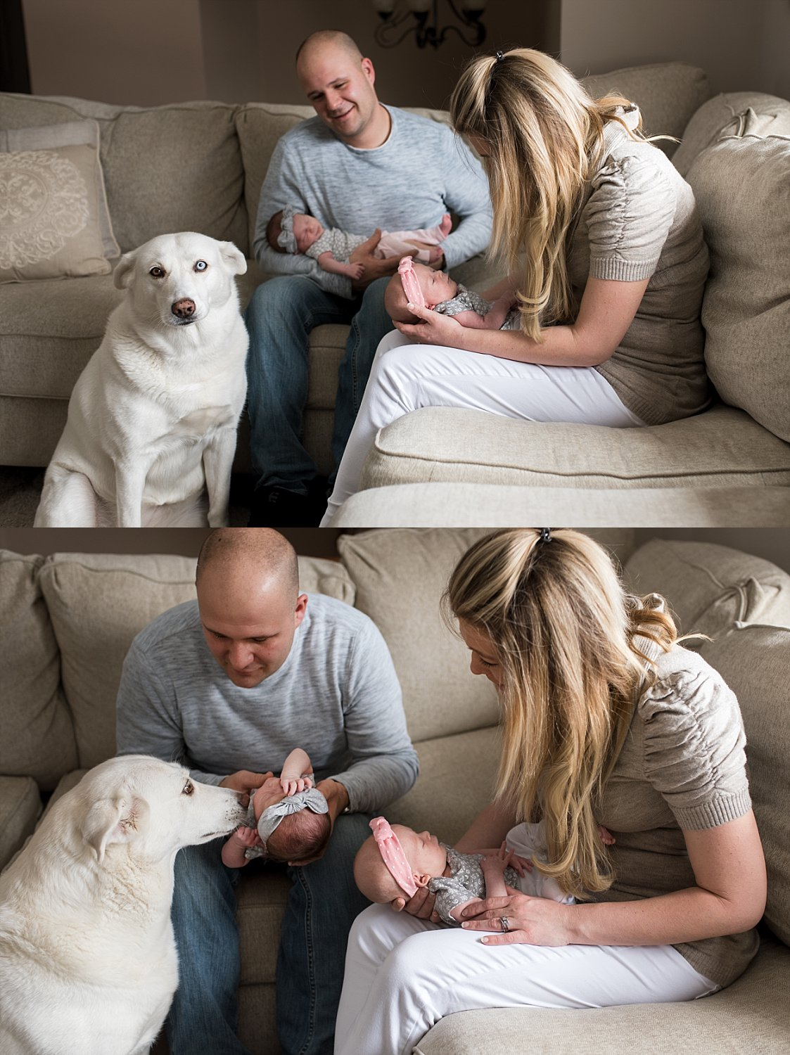 family dog meeting newborn twins during baby photography ct