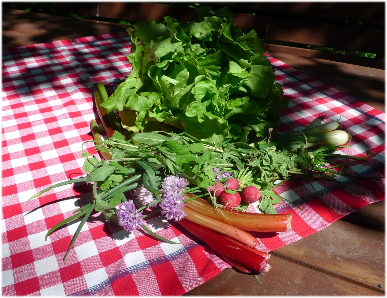 salaatinkerä, raparperiä, retiisejä, sipulia, ruohosipulia, yrttejä