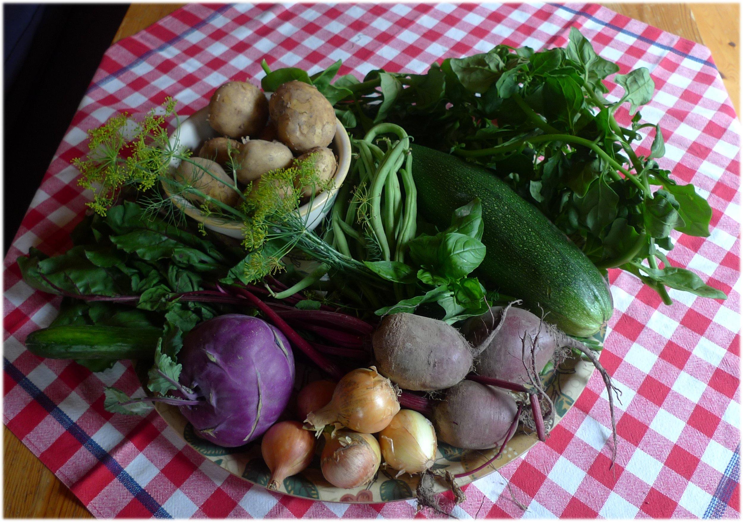 Jako 6.8.2013: Perunoita 1 kg, papuja 300 g, 3 punajuurta, 5 sipulia, 1 kurkku, 1 kyssäkaali, nippu pinaattia, nippu basilikaa, nippu tilliä ja 1 kesäkurpitsa.