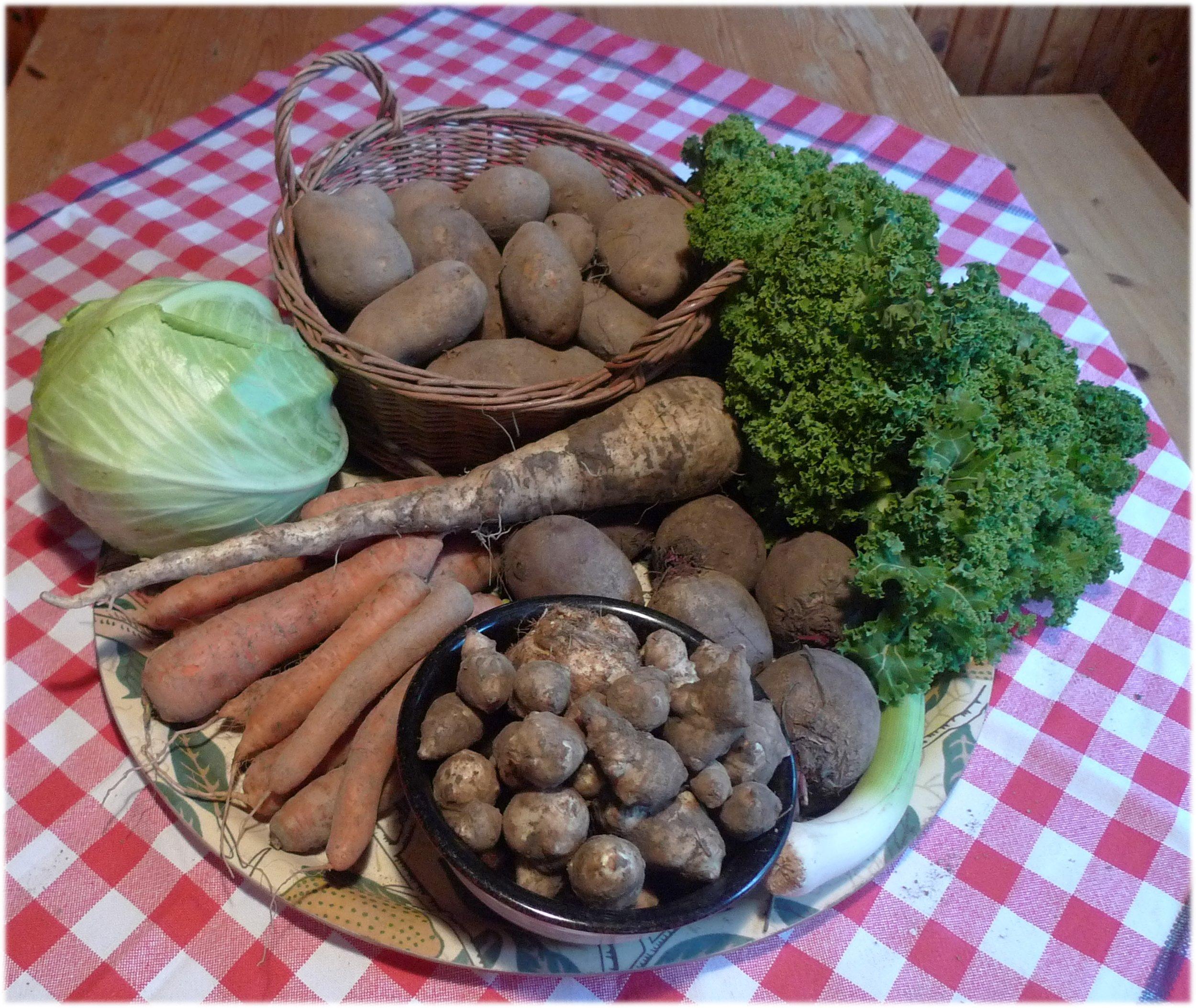 8.10.2013: valkokaali 818 g, lehtikaali 180 g, purjo 116 g, palsternakka 247 g, punajuuret 723 g, porkkanat 738 g, perunat 1947 g, selleri 106 g, ja maa-artisokka 478 g.