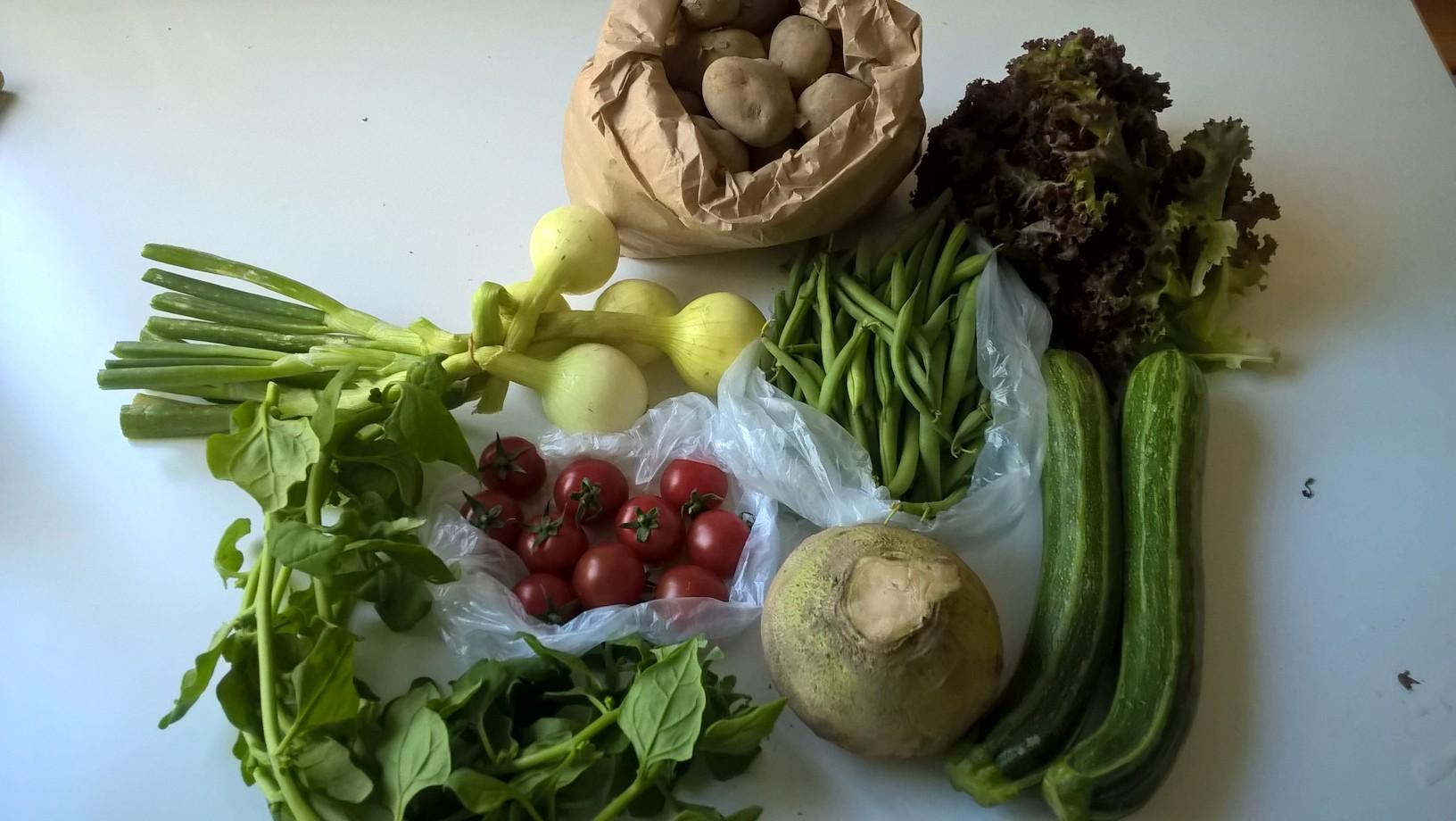 Salaatti 133g, pinaatti 101g, kirsikkatomaatti 245g, peruna 1007g, lanttu 548g, papu 337g, sipuli 515g, kesäkurpitsa 544g