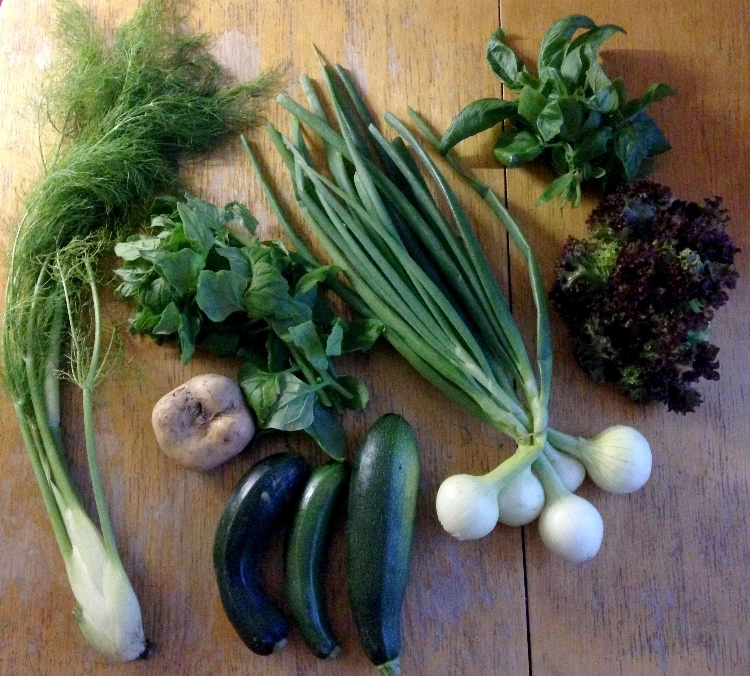 pinaattia, sipulia, naurista/kyssäkaalia, fenkolia, basilikaa, perunaa ja kesäkurpitsaa.