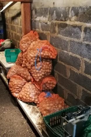 Myös perunasato onnistui tänä vuonna hienosti, ja perunasäkkikasat miltei hipoivat kellarin kattorakenteita..