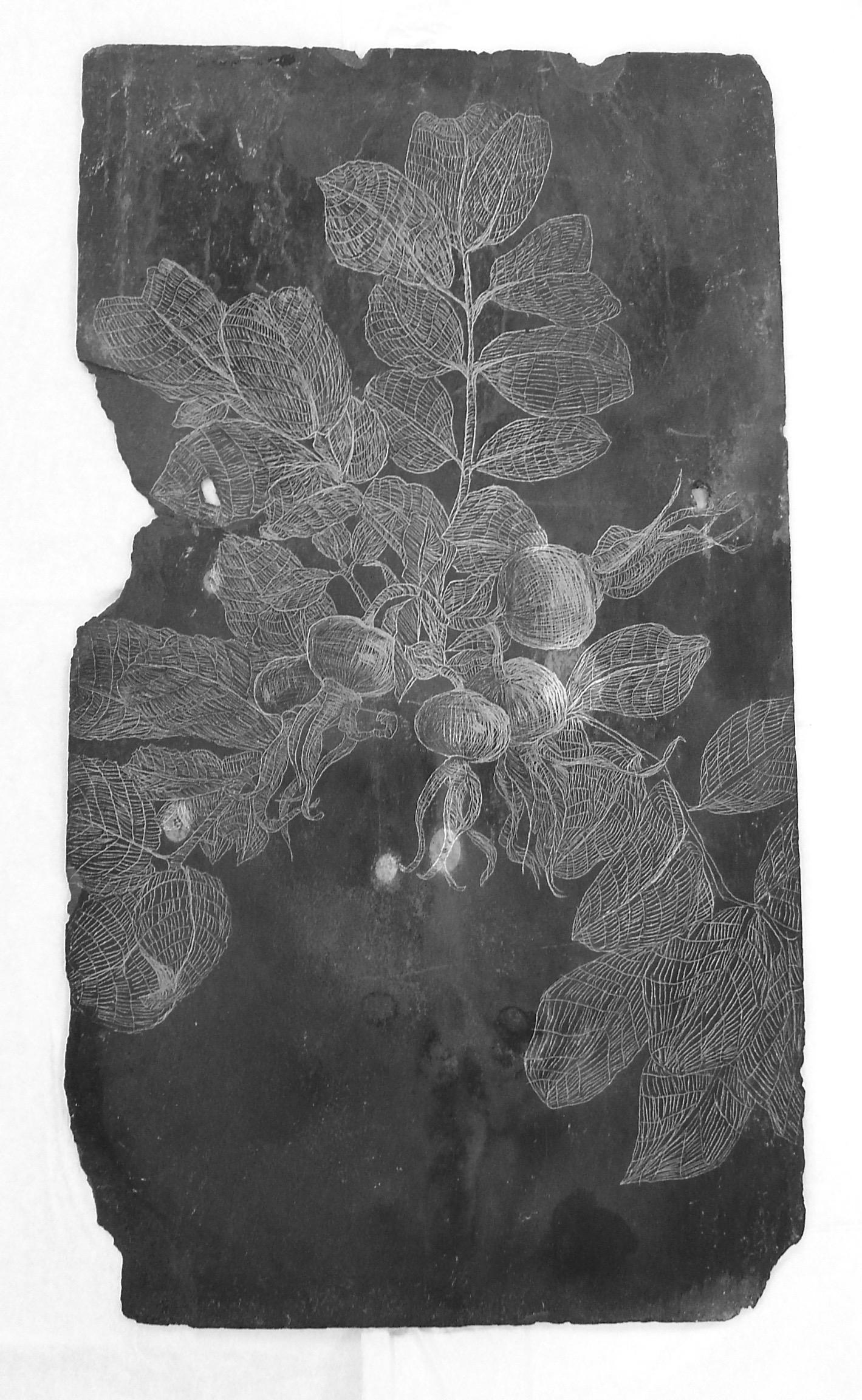 Rosehip, Slate Engraving.