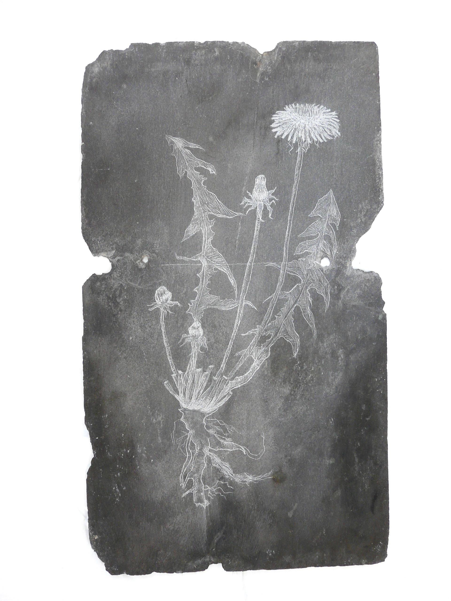 Dandelion, Slate Engraving.