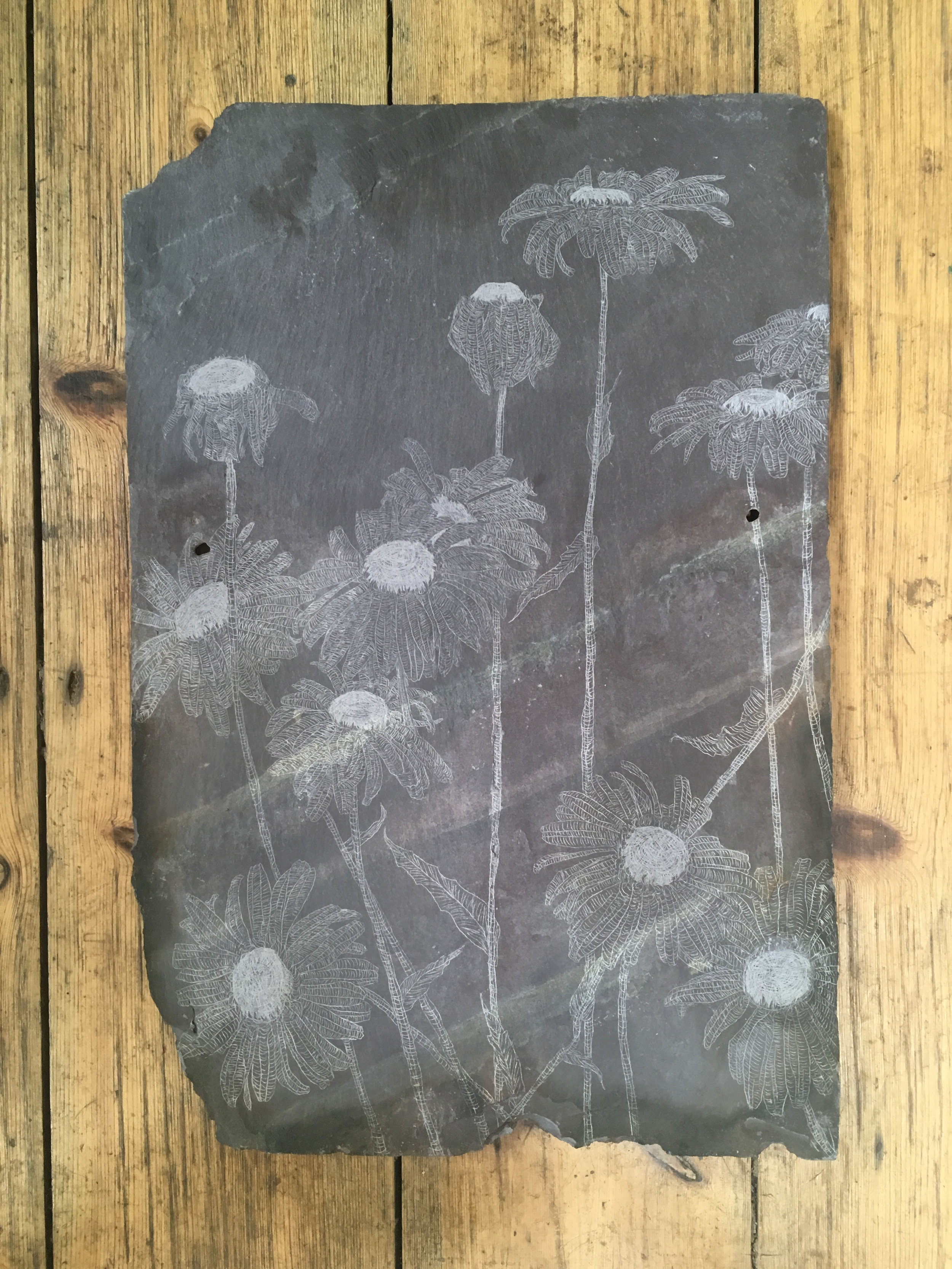 Shasta Daisy, Slate Engraving.