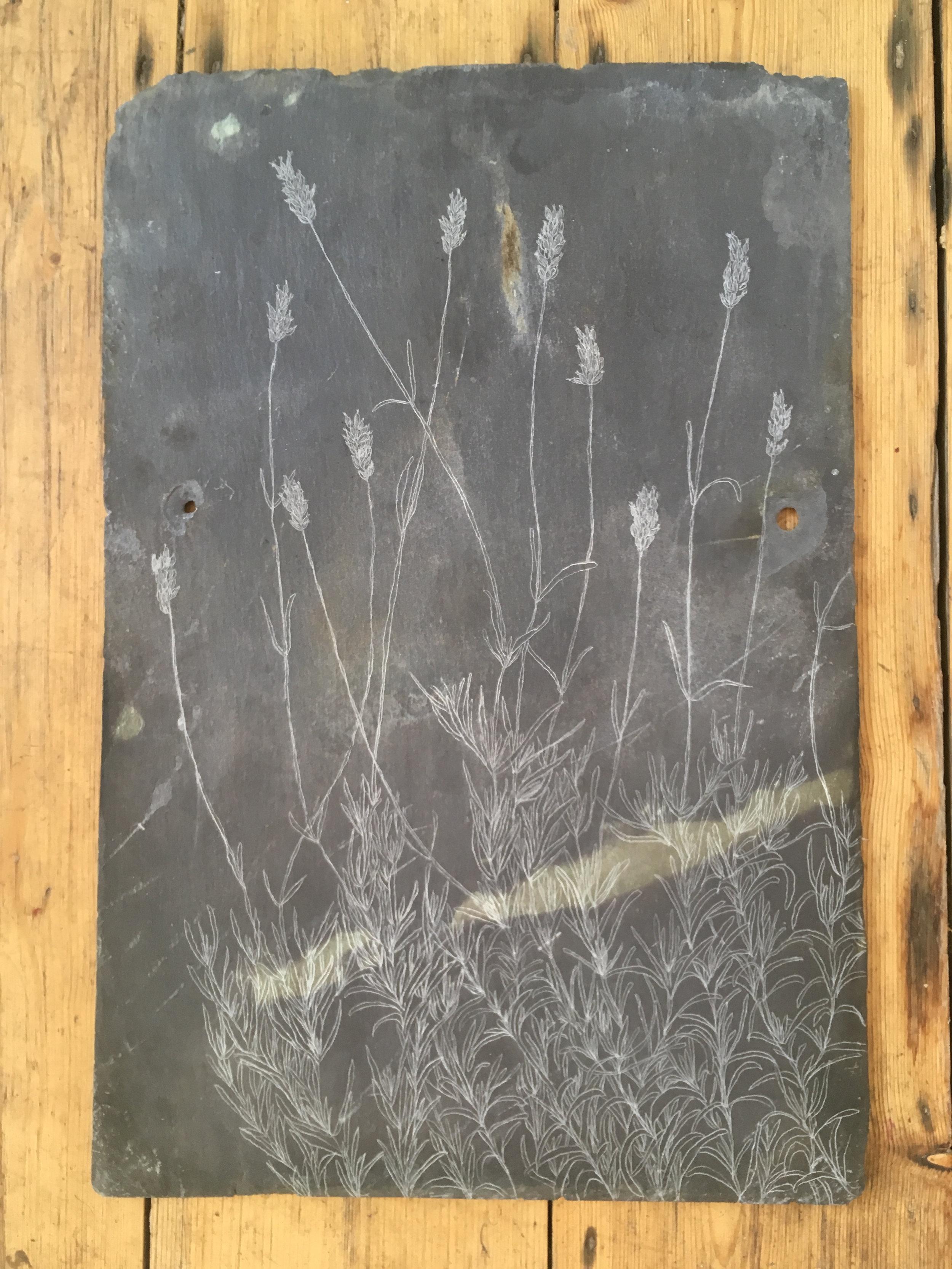 Lavender, Slate Engraving.