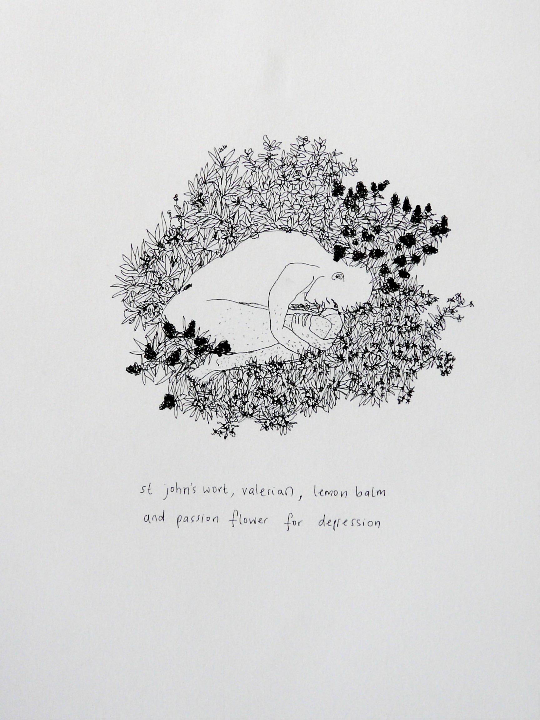 St john's wort. valerian, lemon balm and passion flower for depression,Plants & People Series.