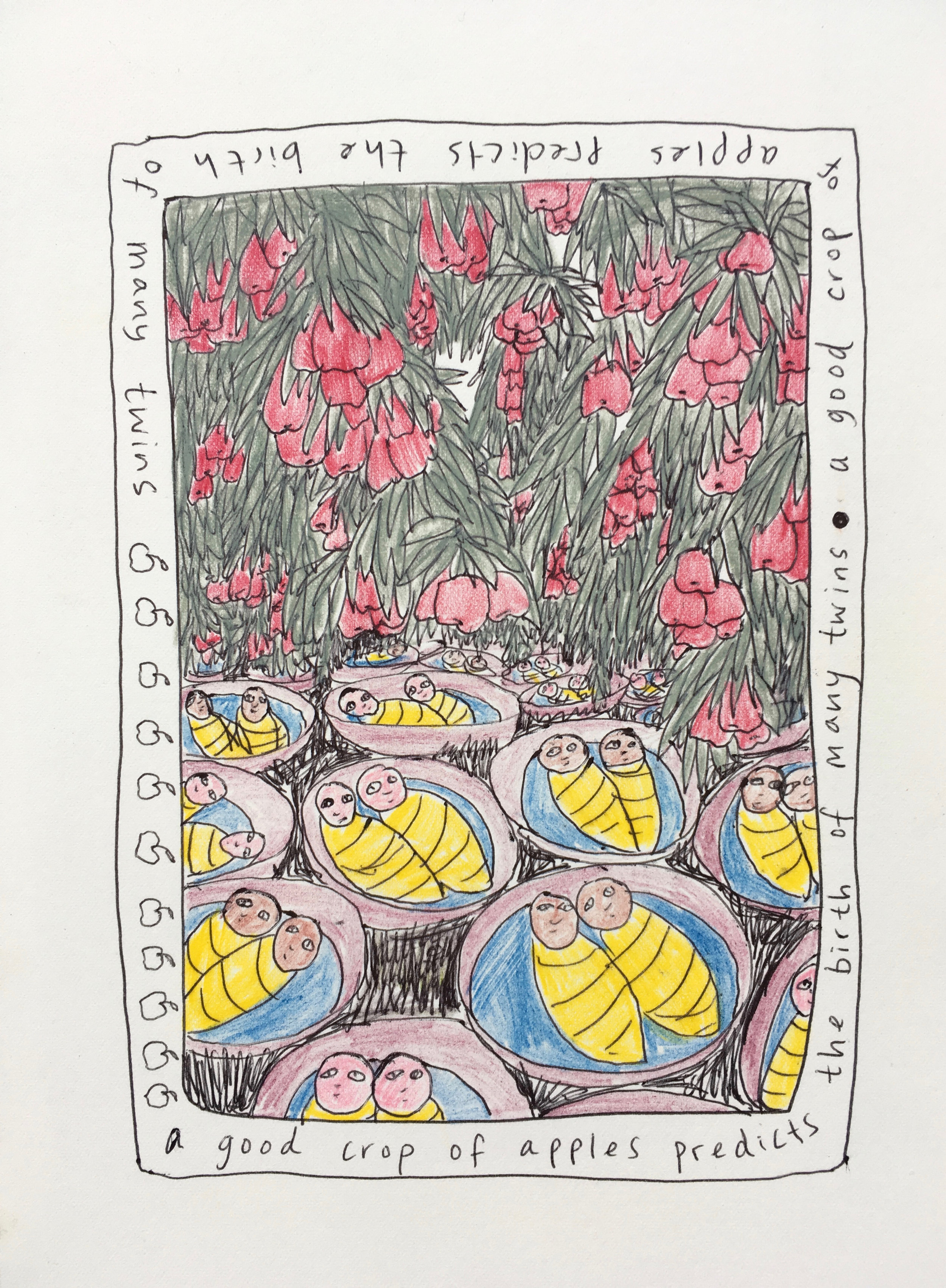 A good crop of apples predicts the birth of many twins, Plant Tales Series (Prints available).