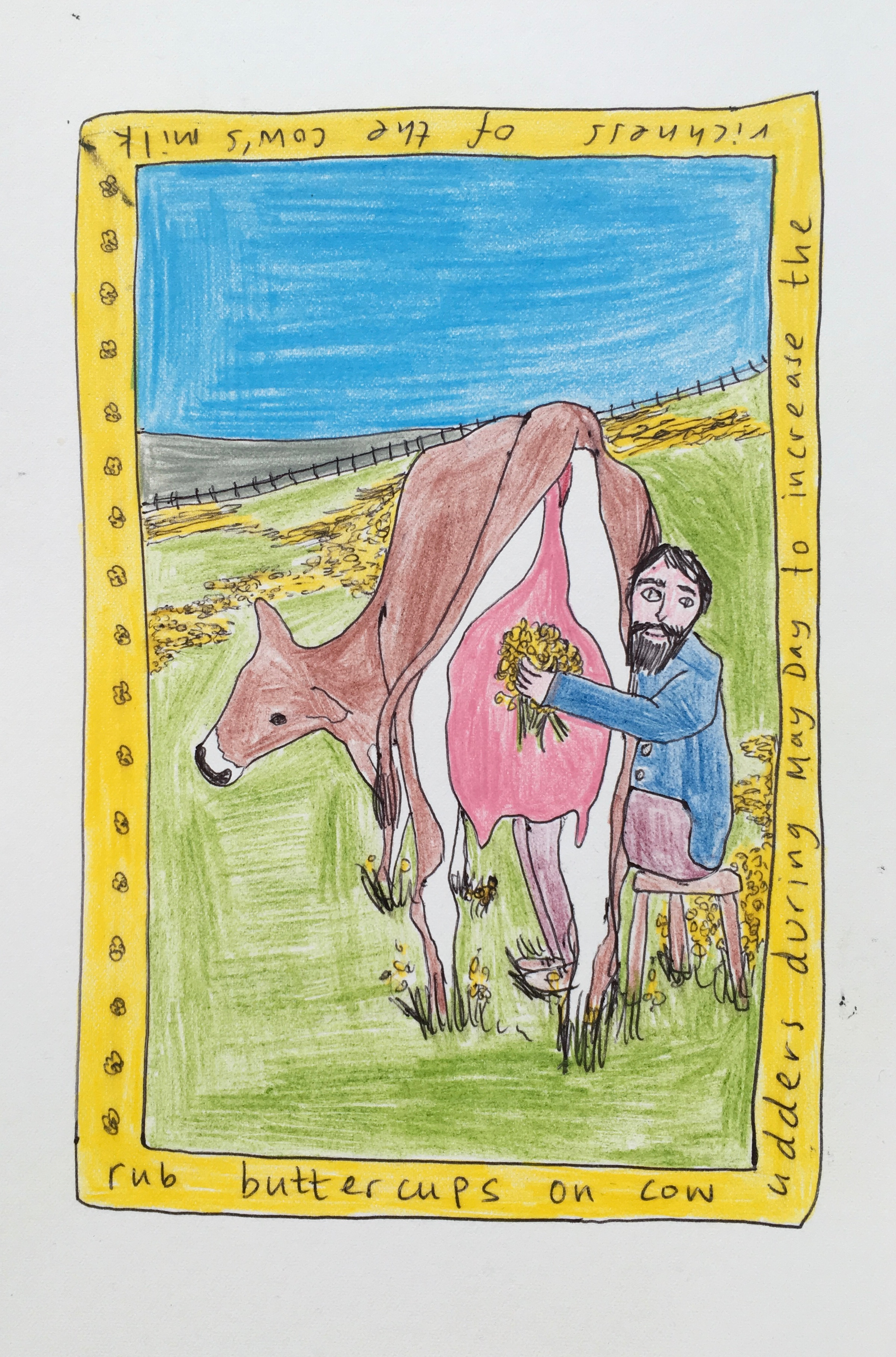 Rub buttercups on cow udders during May Day to increase the richness of the cow's milk,Plant Tales Series (Prints available).