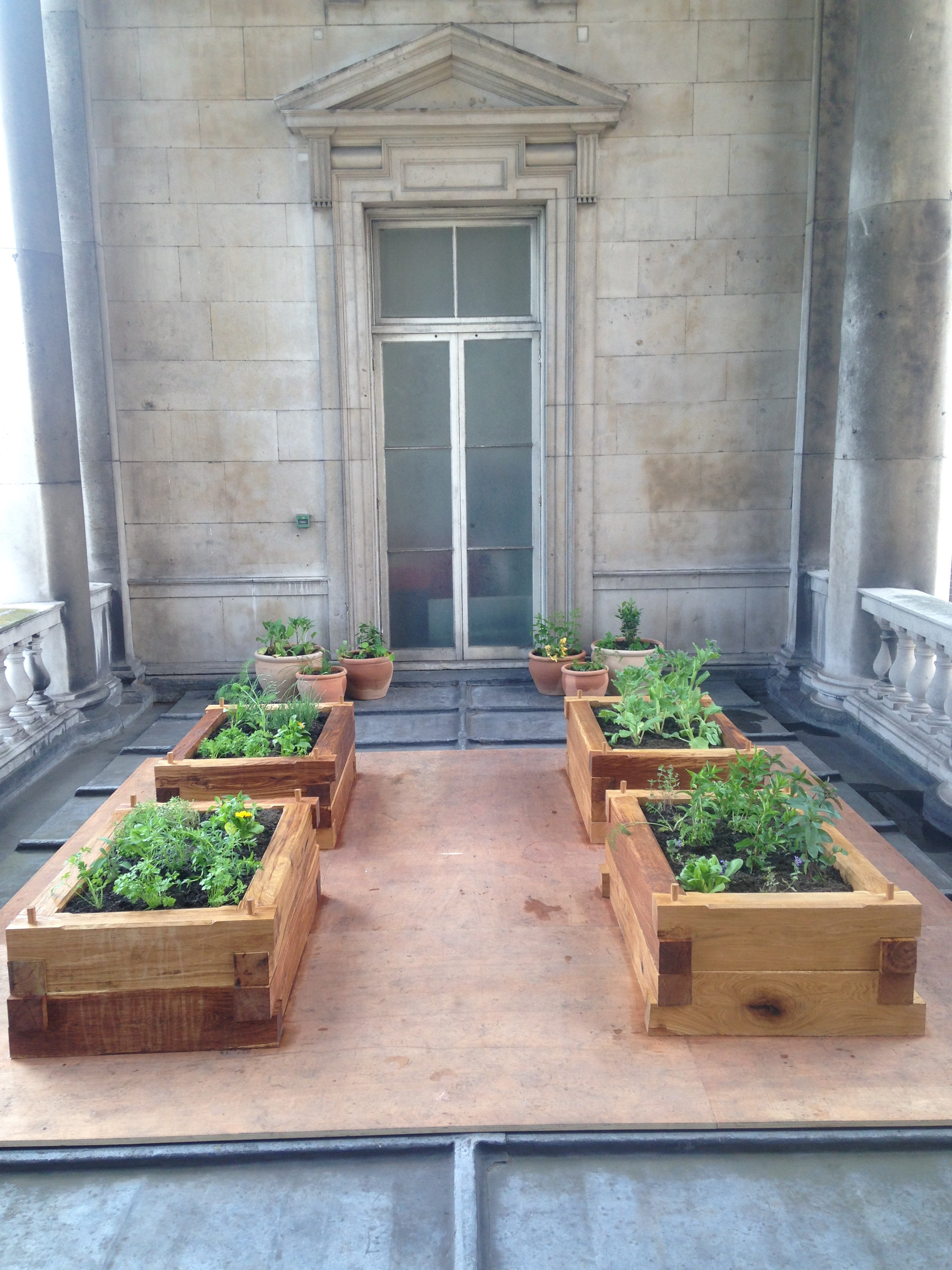 Small,experimental,bee friendly herb garden for Tom's Kitchen on one of the balconies.