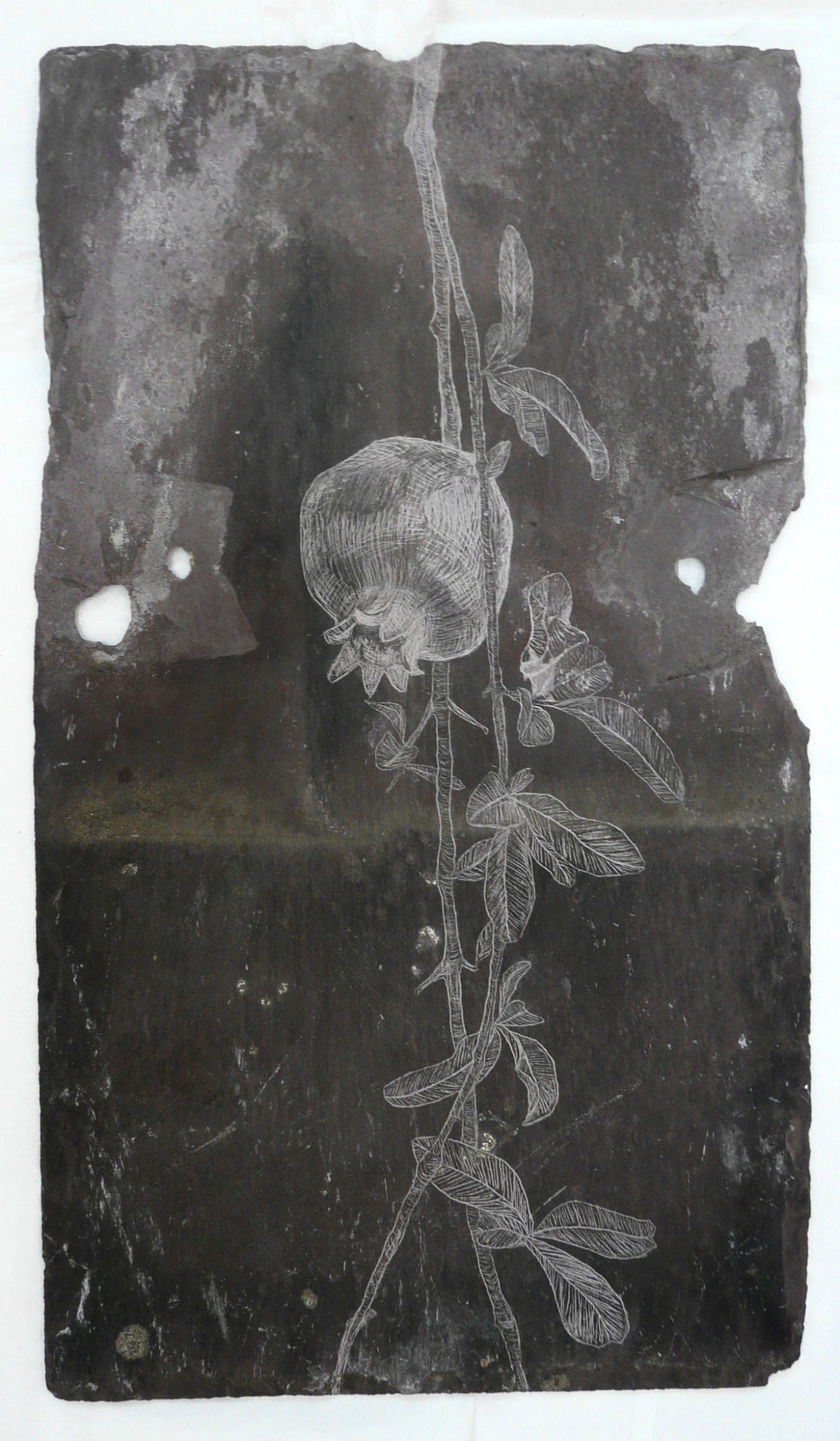 Pomegranate II, Slate Engraving.