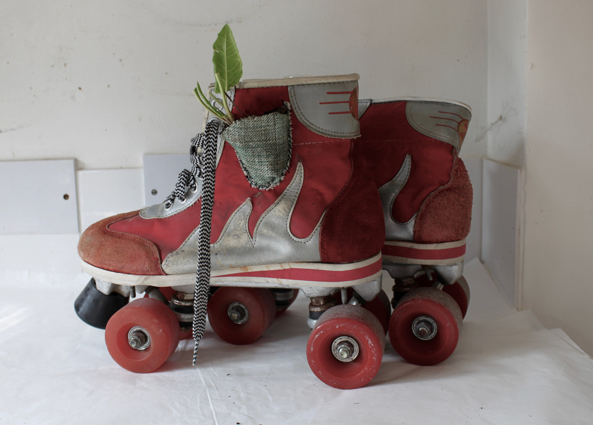 Roller skates, useful means of transporting a plant or two around and allowing for the opportunity of spontaneous planting and spreading of edible plants in the city.