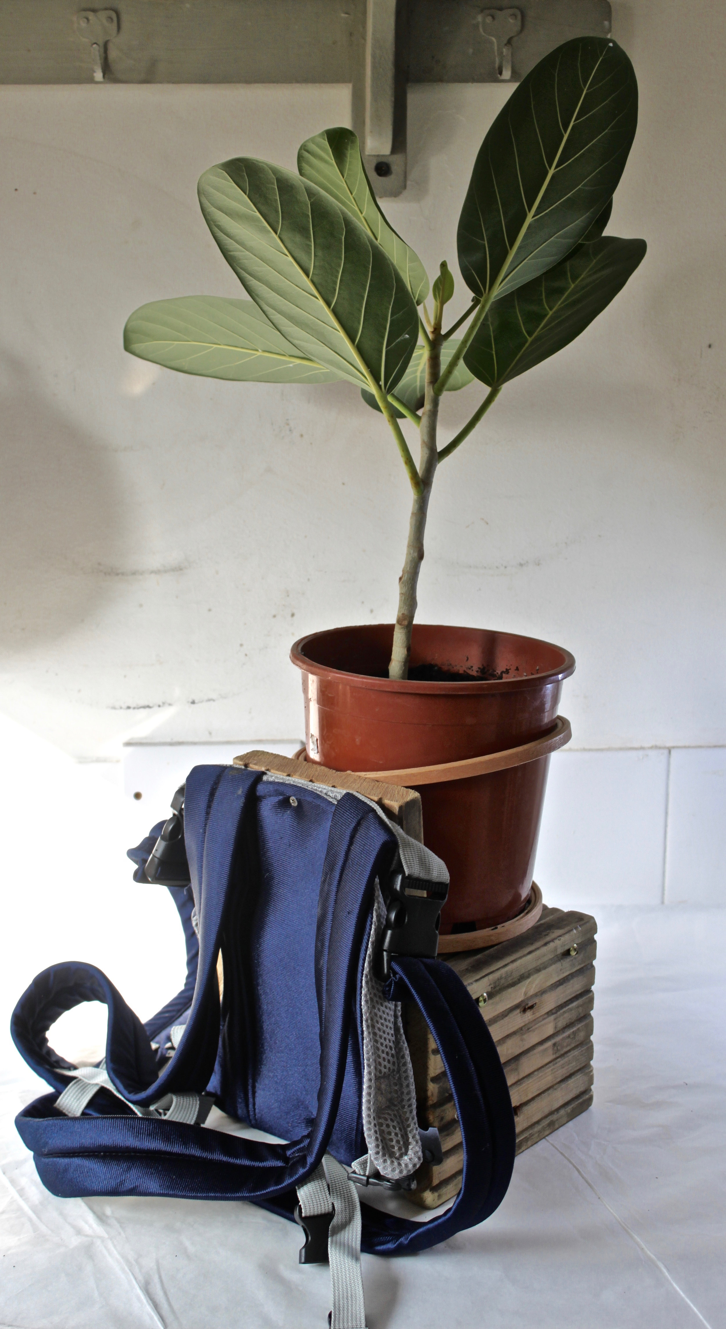 Plant Hugger, useful for wearing in overly crowded situations for grounding and a sense of calm. Particularly successful when wearing aromatic plants such as Lavender.