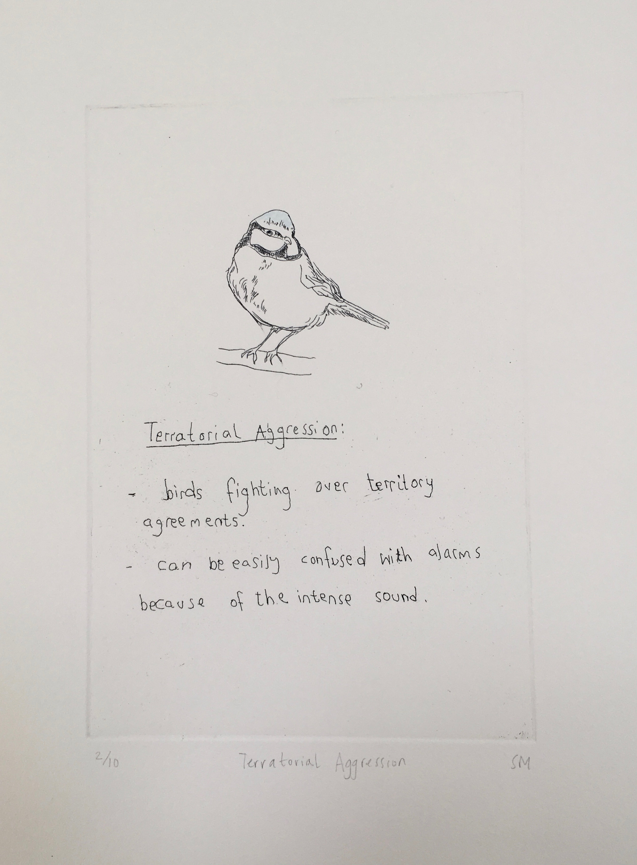 Territorial Aggression, Language of Song Birds, Hand tinted etching (Etchings available).