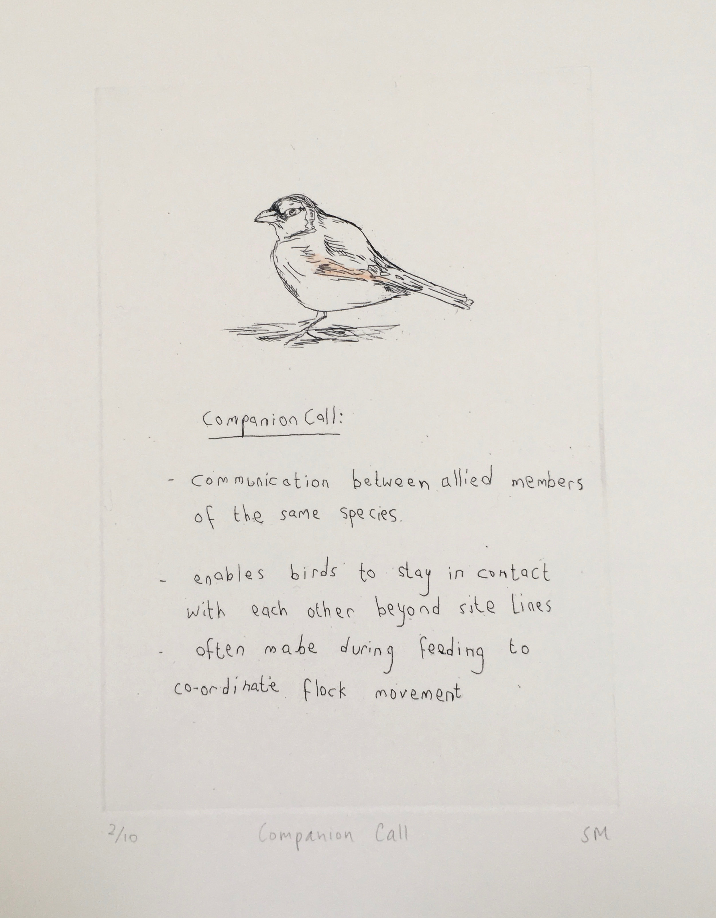 Companion Call,Language of Song Birds II, Hand tinted etching (Etchings available).