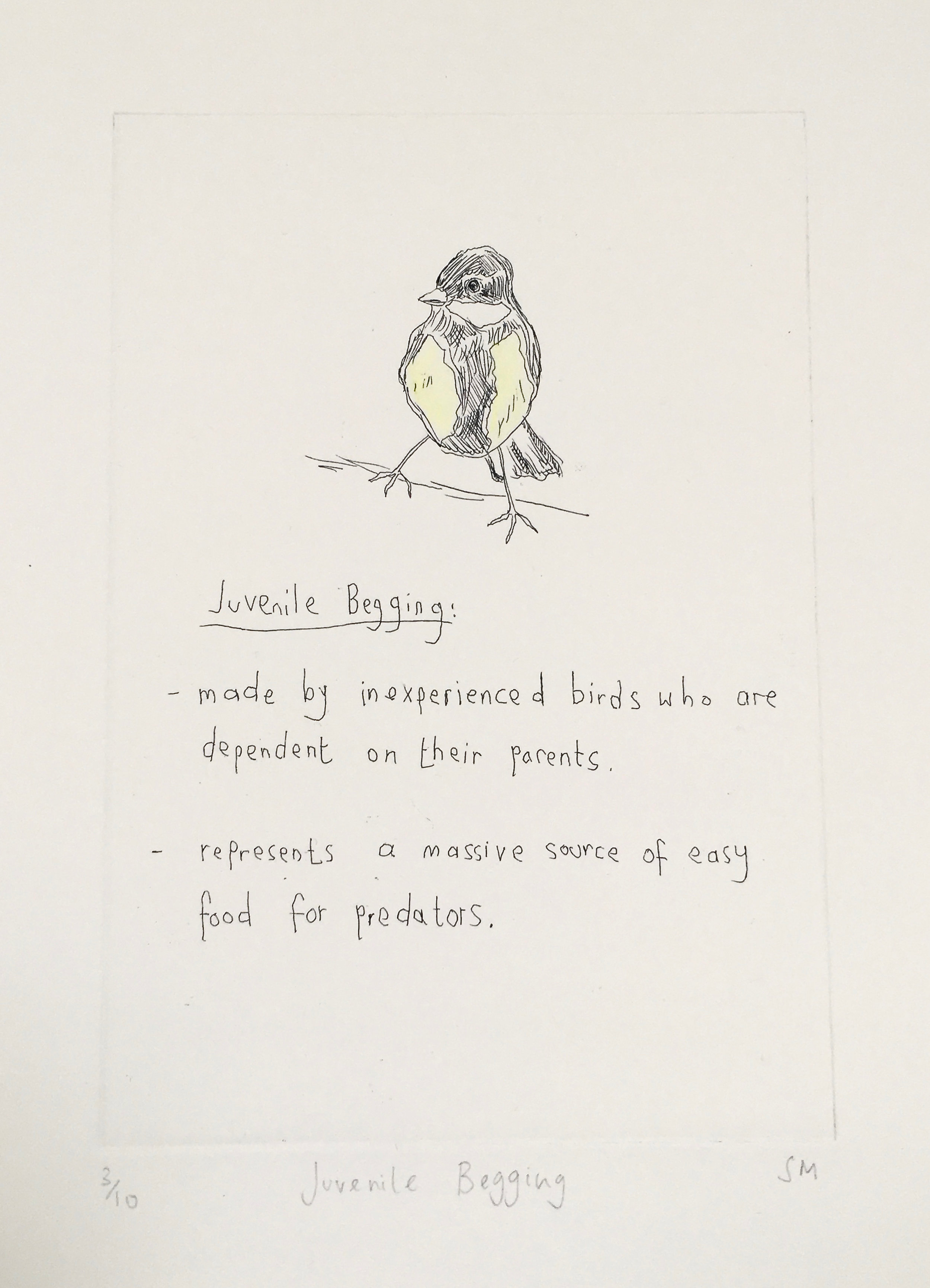 Juvenile Begging,Language of Song Birds III, Hand tinted etching (Etchings available).