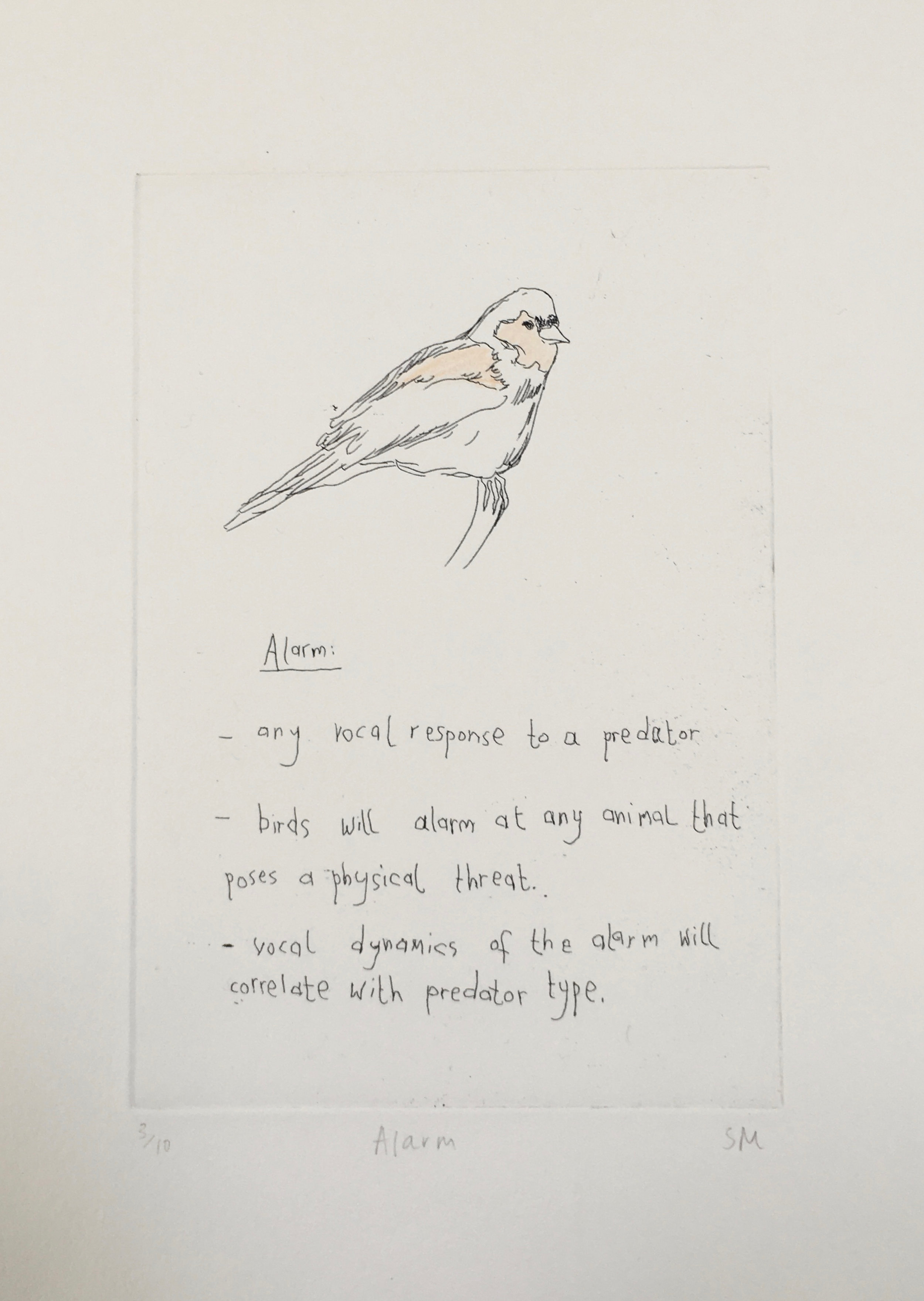Alarm, Language of Song Birds IV, Hand tinted etching (Etchings available).