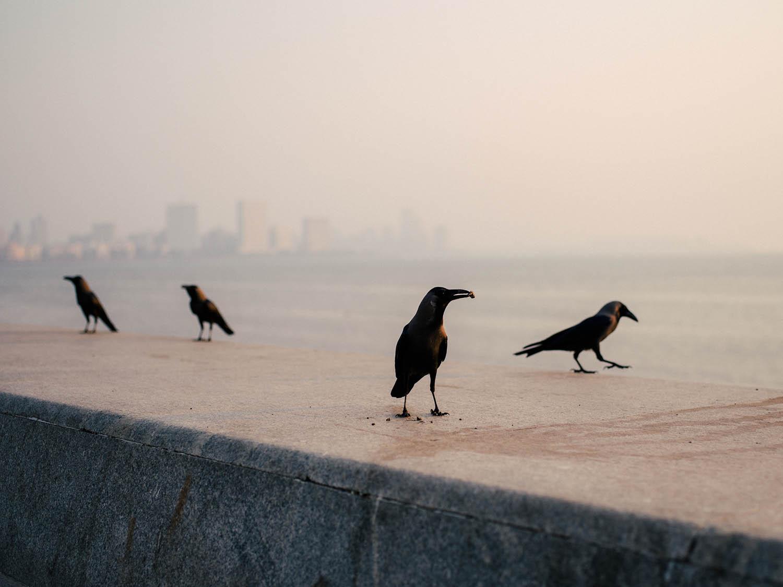 Birds at Marine Drive.