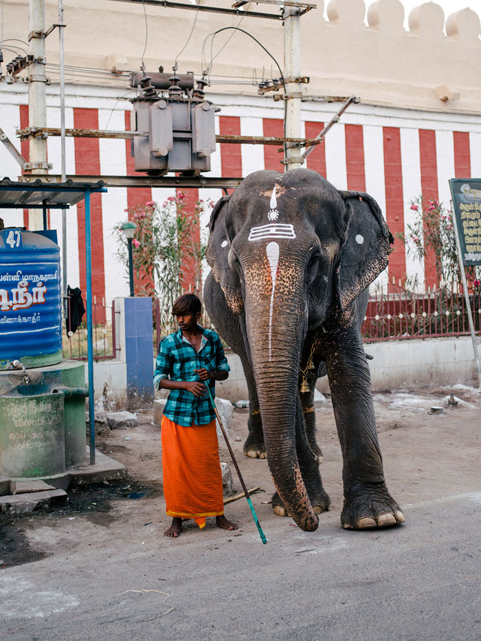 Beautiful elephant in front of the temple.